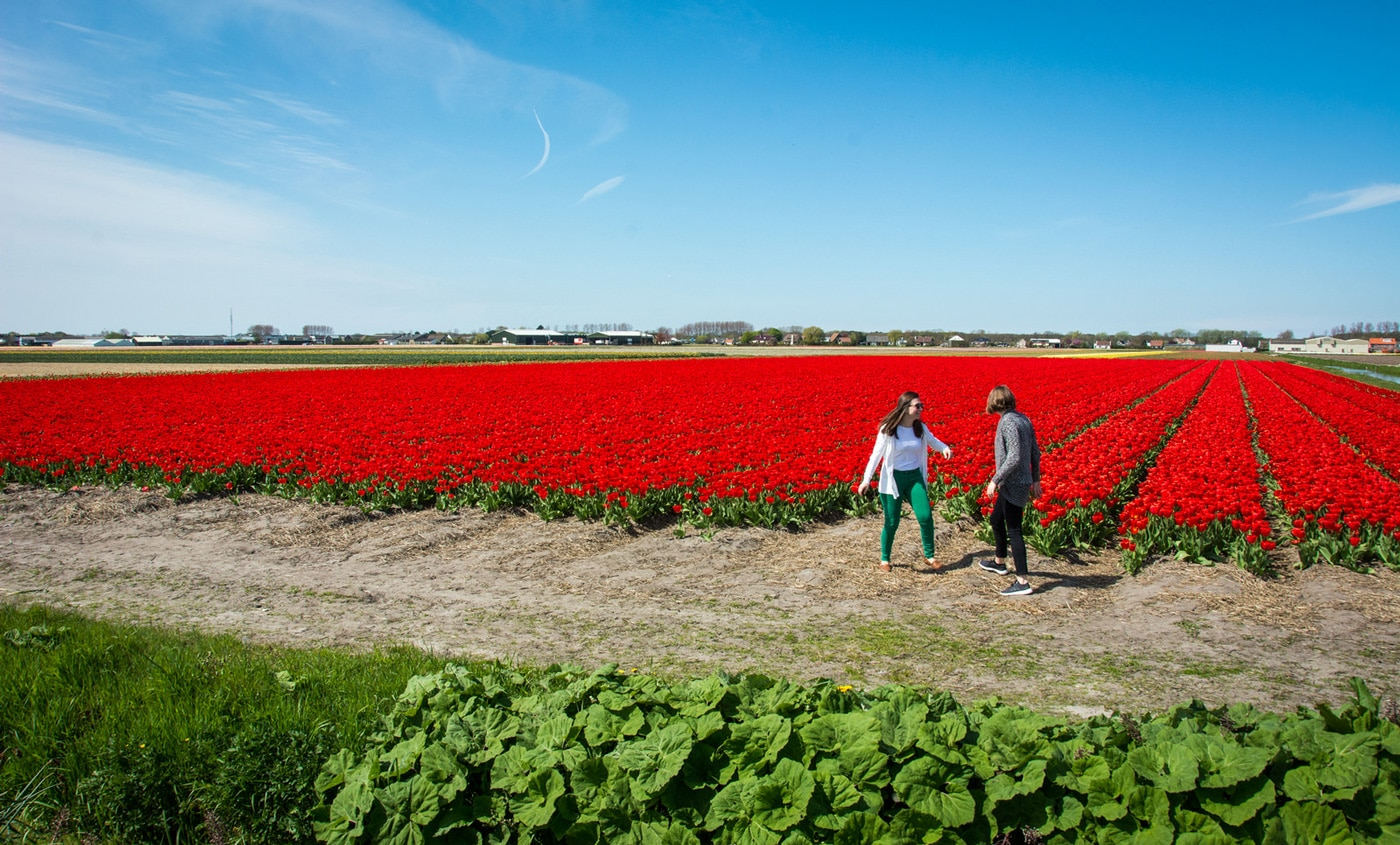 Two girls frolicking in the tulips in the Netherlands