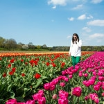 How to see tulips in the Netherlands on a budget - Walking in tulip fields in the Netherlands