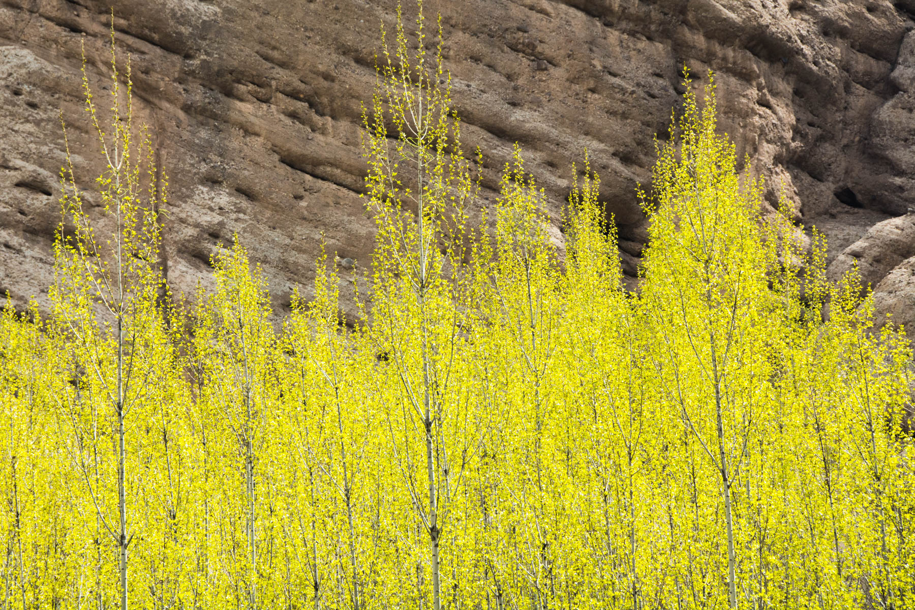 Spring colors on trees in the valley