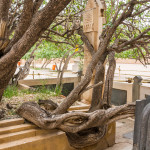 A tree growing from the tomb at Jami mausoleum in Torbat-e Jam