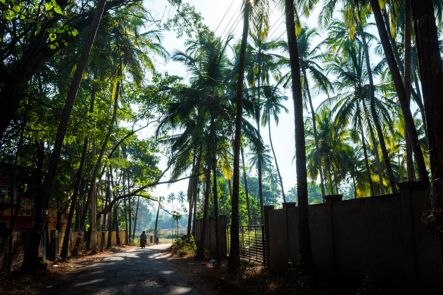 Motorbiking on Goa's winding, forested roads