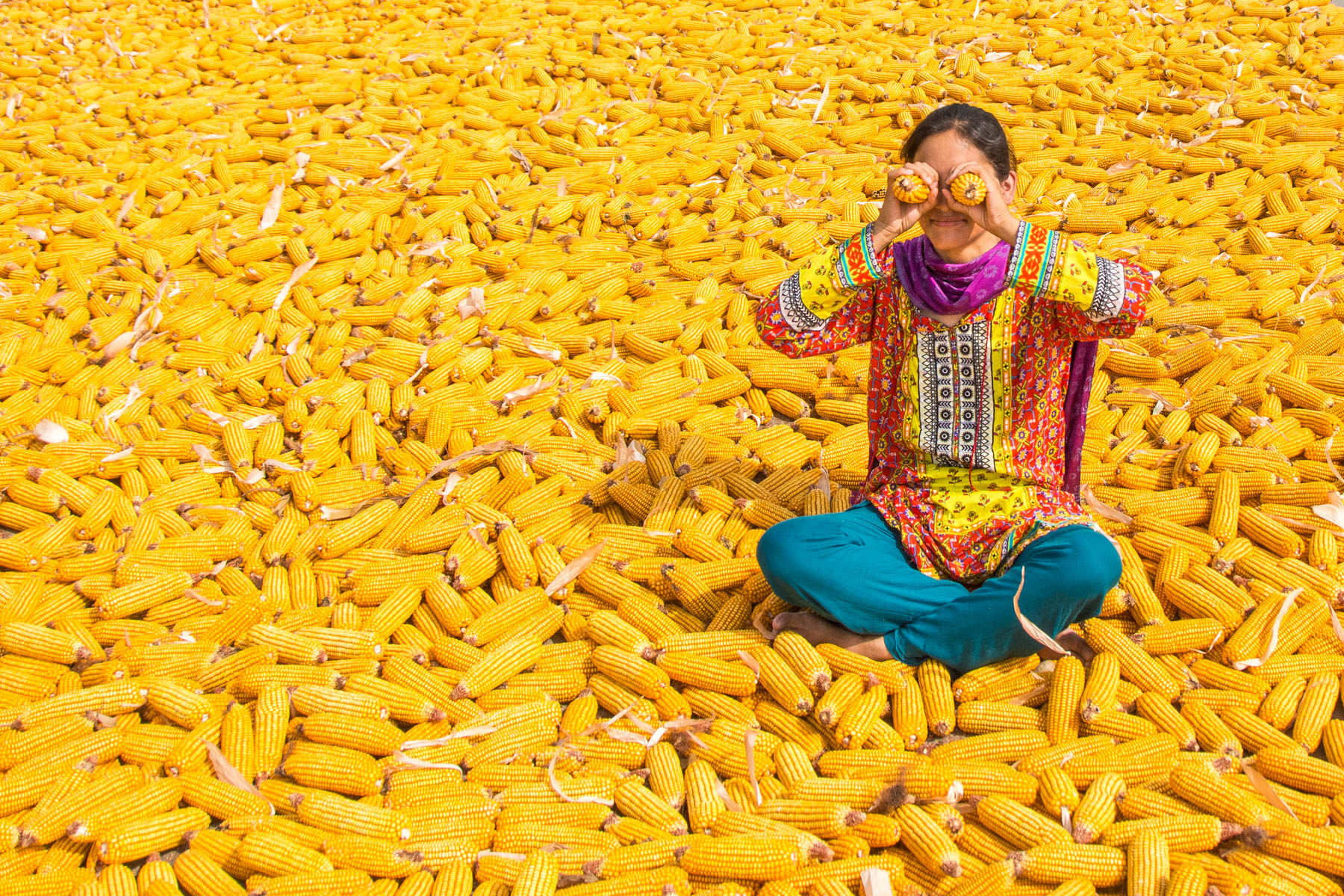 A girl sitting in a field of corn in Pakistan