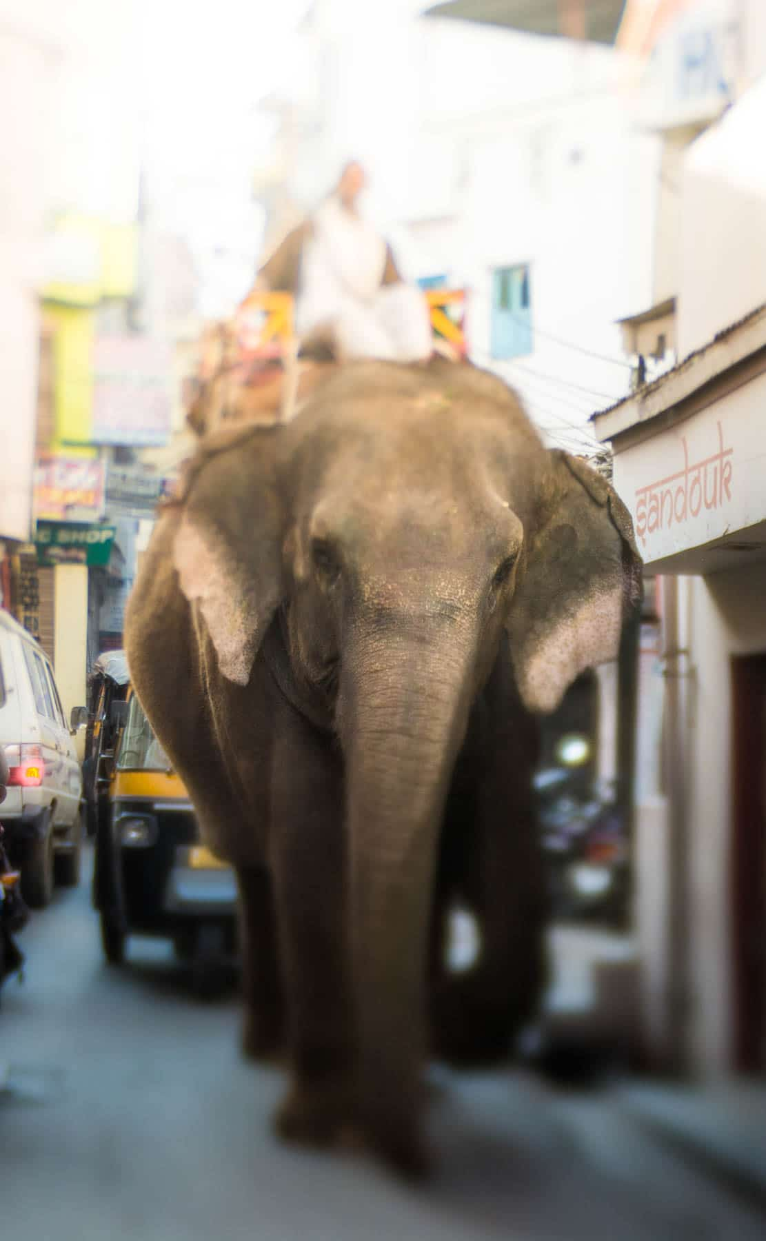 Lensbaby Edge 50 Optic review - Elephant walking the streets of Udaipur, India - Lost With Purpose
