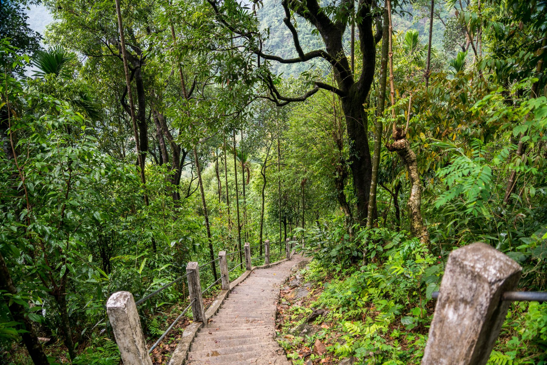 Photo essay of Nongriat and the living root bridges of Meghalaya, India - The cement stairway to Nongriat - Lost With Purpose