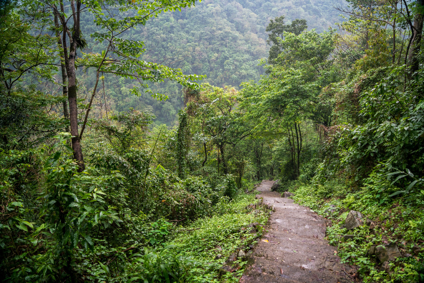 Photo essay of Nongriat and the living root bridges of Meghalaya, India - The winding path down to Nongriat - Lost With Purpose
