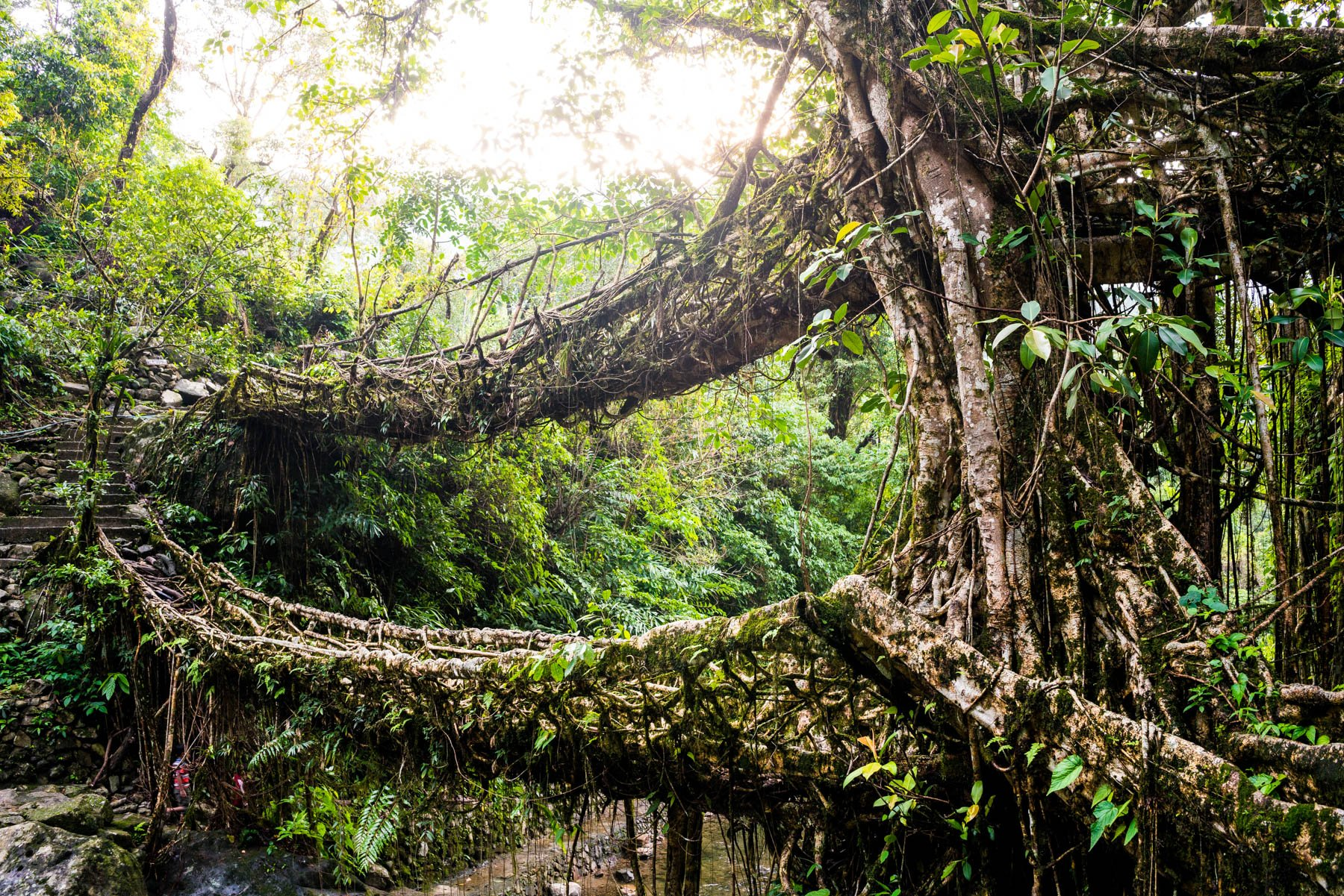Photo essay of Nongriat and the living root bridges of Meghalaya, India - The Umshiang double-decker root bridge - Lost With Purpose