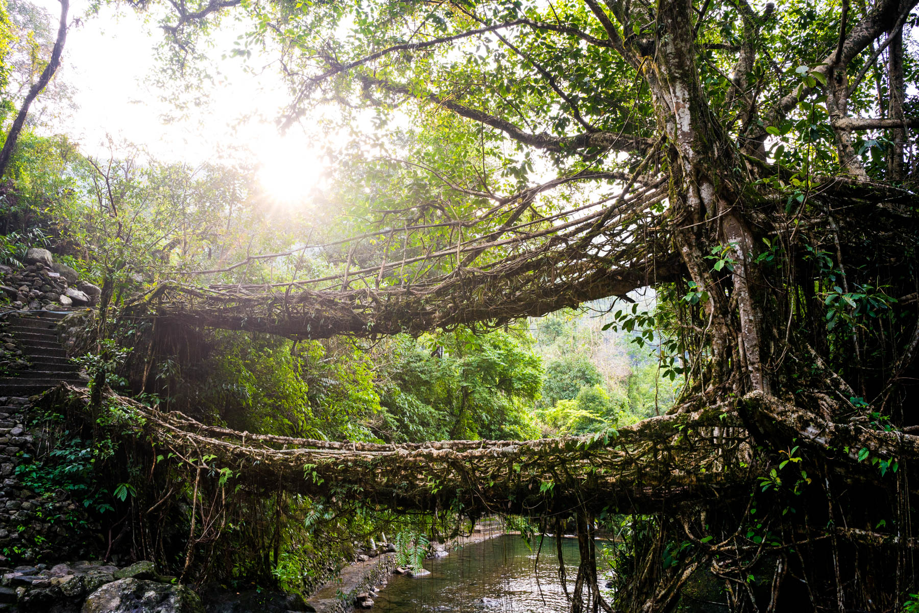 How to get from Guwahati to Shillong and Cherrapunjee in Meghalaya, India - Root bridge in Nongriat - Lost With Purpose