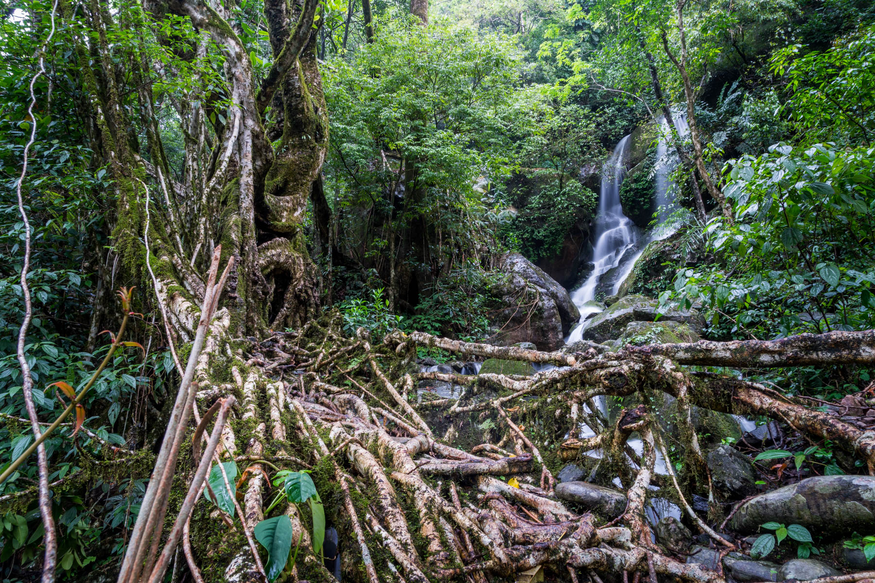 Photo essay of Nongriat and the living root bridges of Meghalaya - HDR image of a root bridge and waterfall - Lost With Purpose
