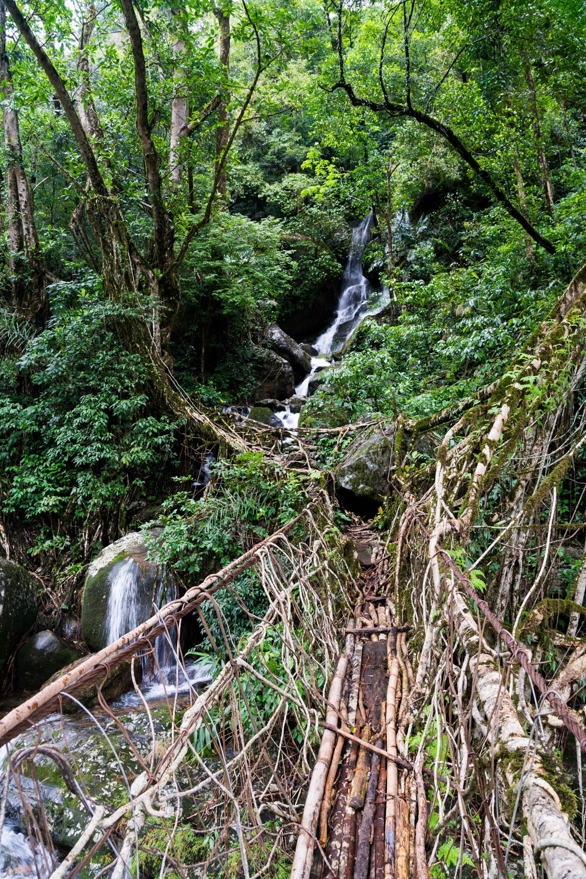 A waterfall and root bridge in the works near Nongriat village in Meghalaya state, India. The bridge is made from the roots of rubber trees, carefully guided across the expanse with betel nut tree trunks over several decades.