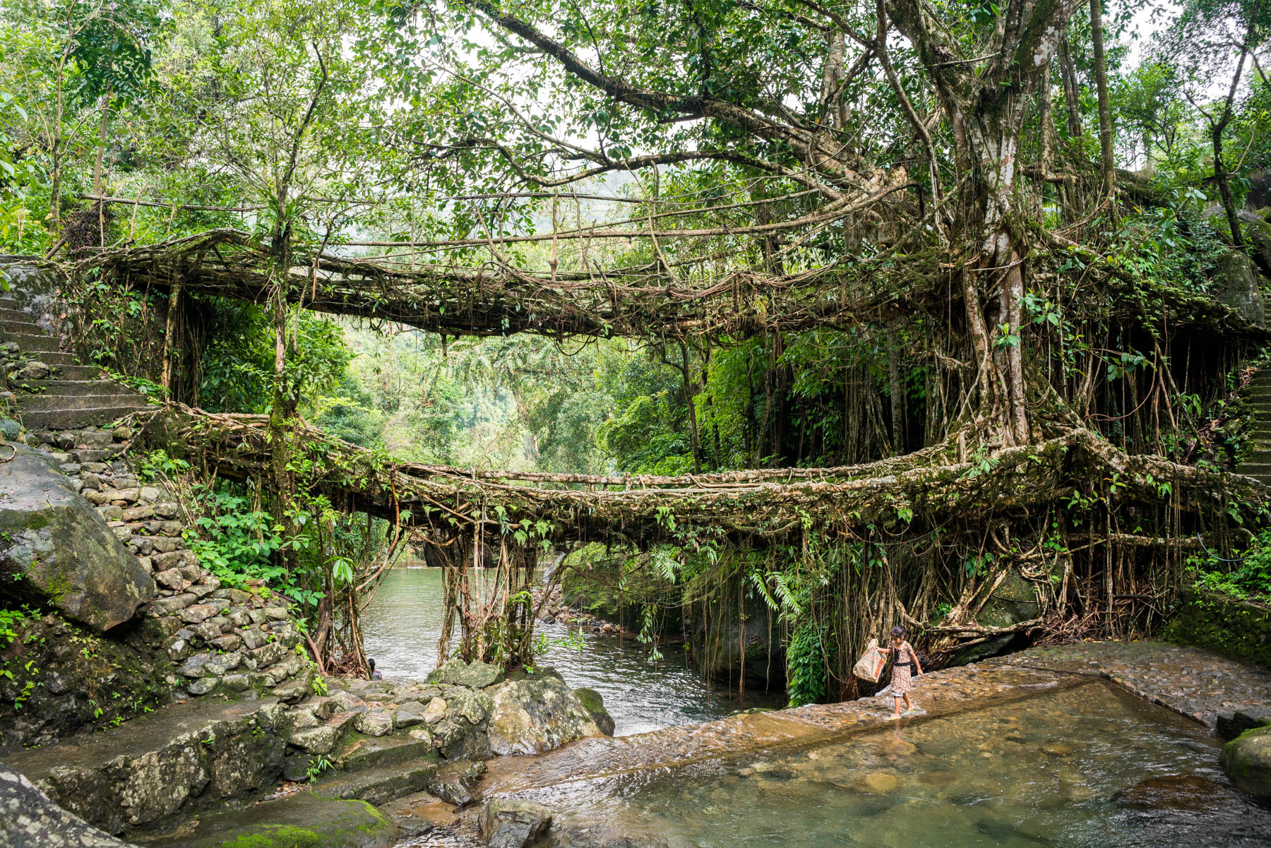 Photo essay of Nongriat and the living root bridges of Meghalaya, India - A local village girl walking past Umshiang double-decker root bridge - Lost With Purpose