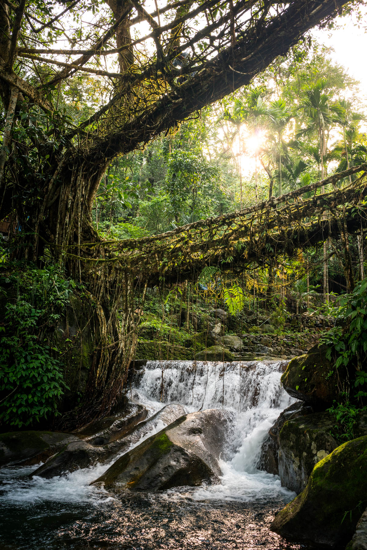The Umshiang double-decker living root bridge near Nongriat village in Meghalaya state, India. The bridge is made from the roots of rubber trees, carefully guided across the expanse with betel nut tree trunks over several decades.