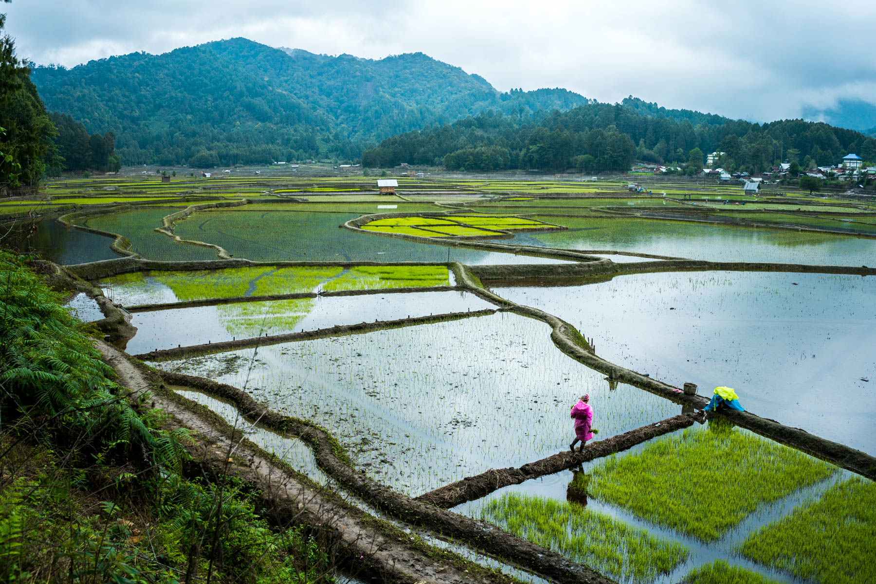 Travel to Arunachal Pradesh, India - A woman walking on the rice paddies in Ziro Valley - Lost With Purpose