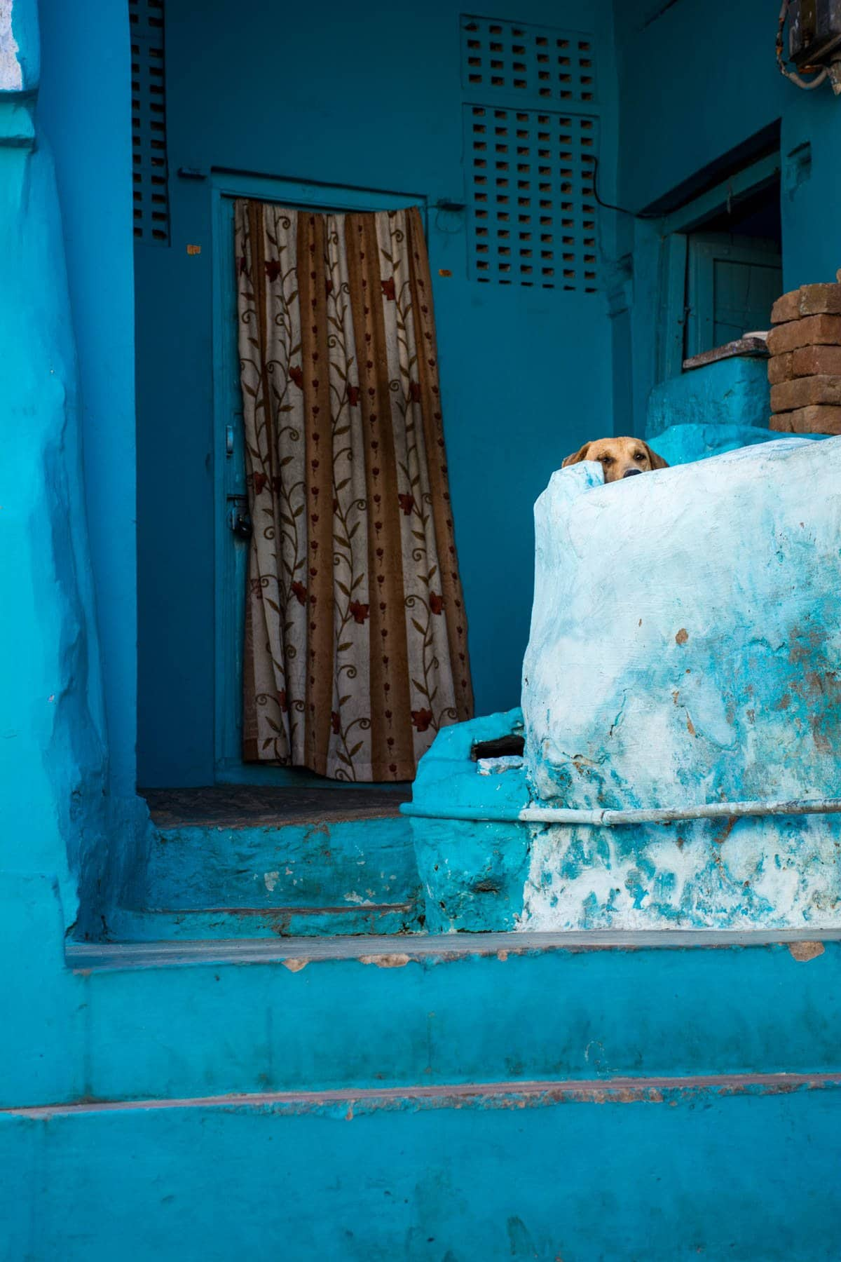Photo essay about the streets and people of the Blue City of Jodhpur, Rajasthan, India - A dog on a blue stoop - Lost With Purpose