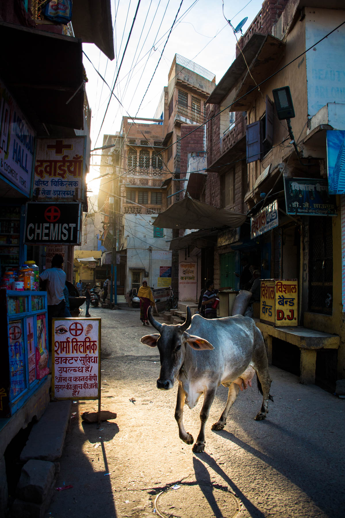 A rogue cow crossing the streets during sunset in Jodhpur, Rajasthan, India.