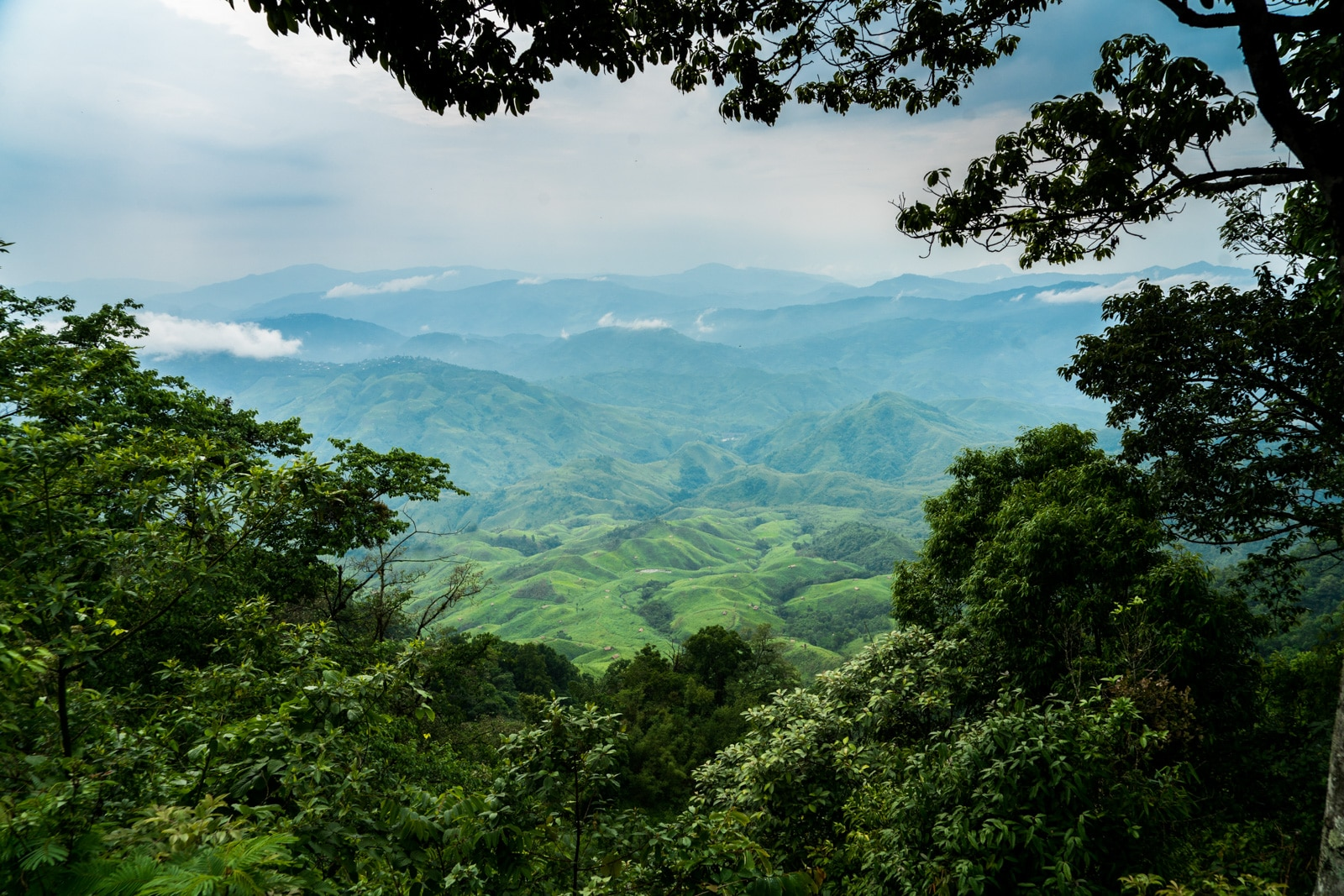 Hills and trees in Nagaland