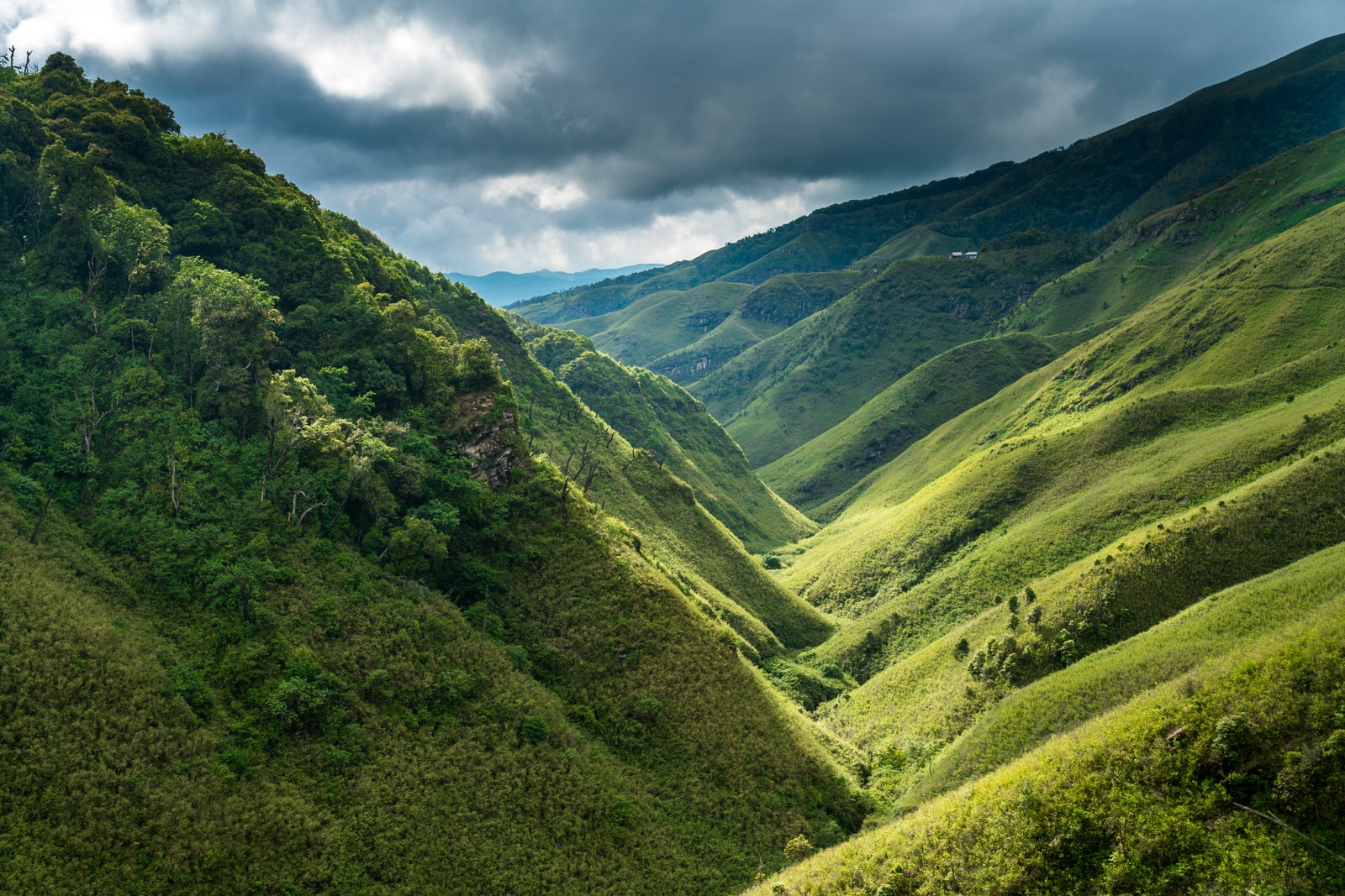 How to get to Dzukou Valley from Kohima, Nagaland, India - The path leading through Dzukou Valley to the rest house - Lost With Purpose