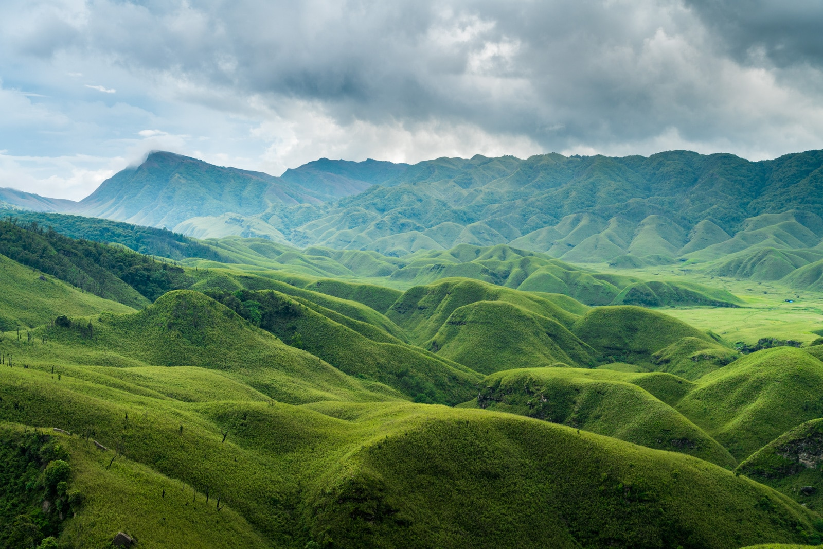 The green carpeted hills of Dzukou Valley