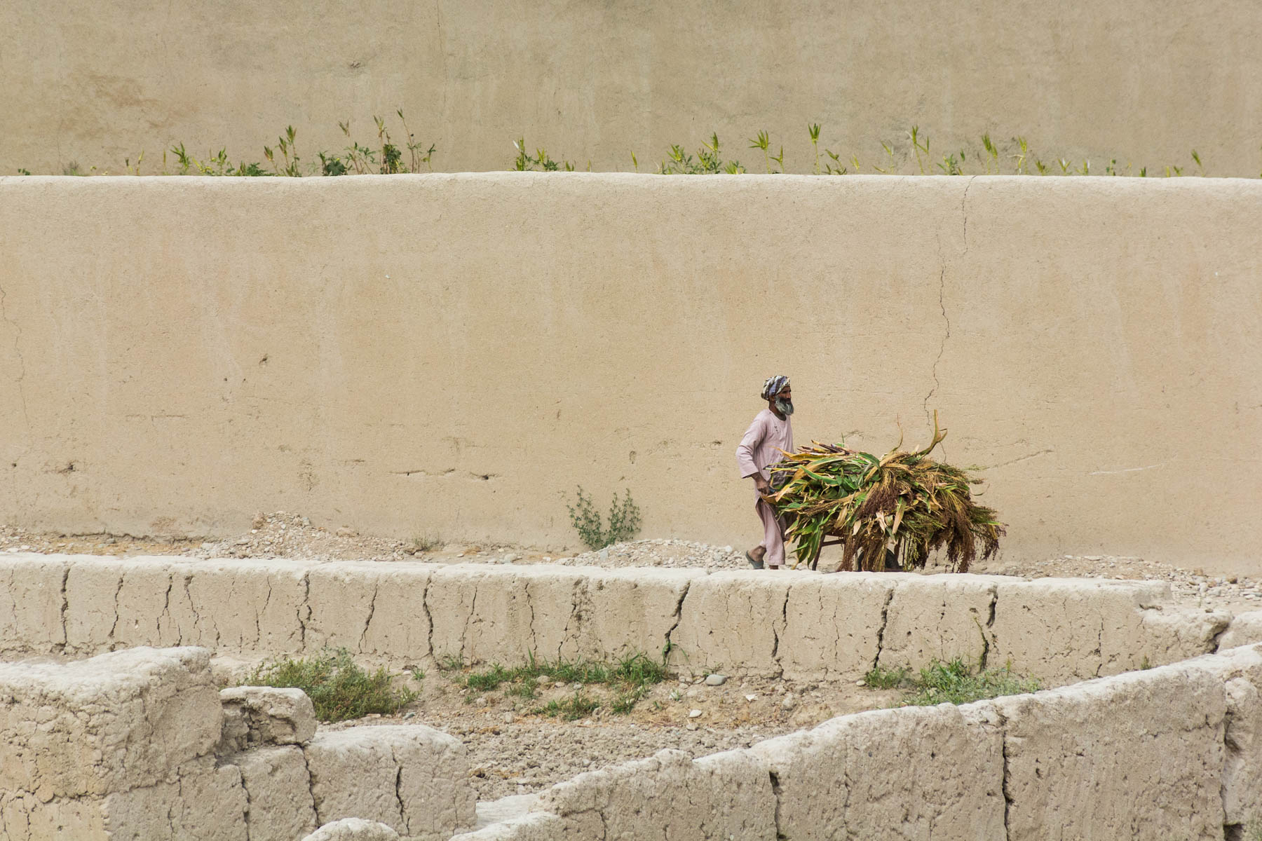 Photos of Balkh, Afghanistan - A man pushing a cart of dried leaves in Balkh - Lost With Purpose