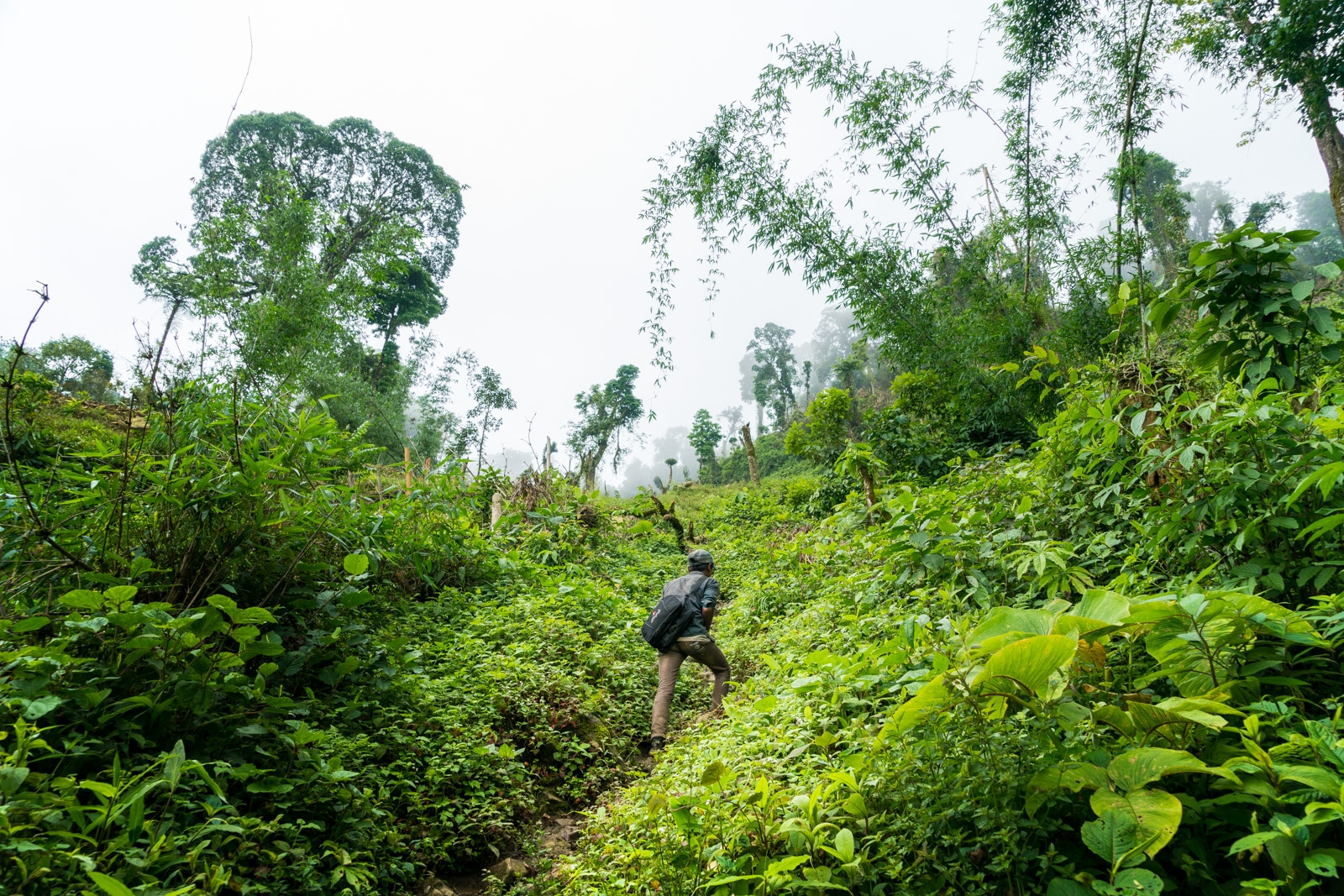 What to pack for monsoon travel - Walking in the jungles of Longwa, Nagaland, India - Lost With Purpose