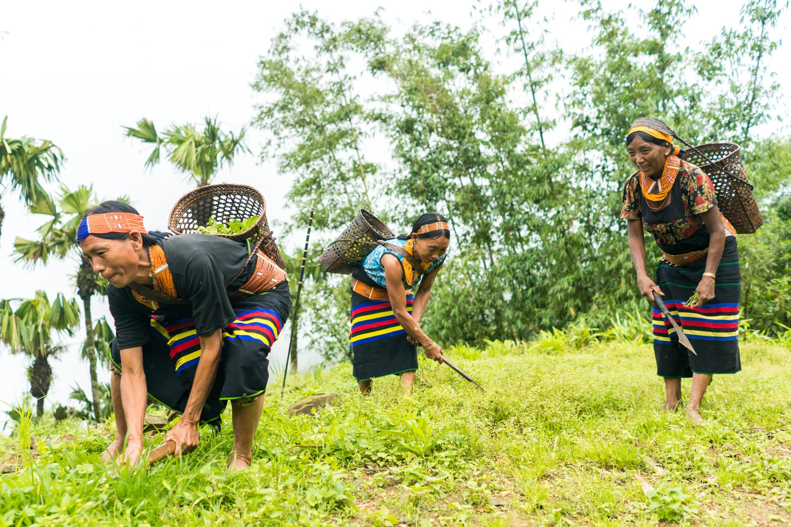 Photos of traditional tribal culture in Longwa village, Nagaland, Northeast India - Longwa women in traditional dress picking plants - Lost With Purpose