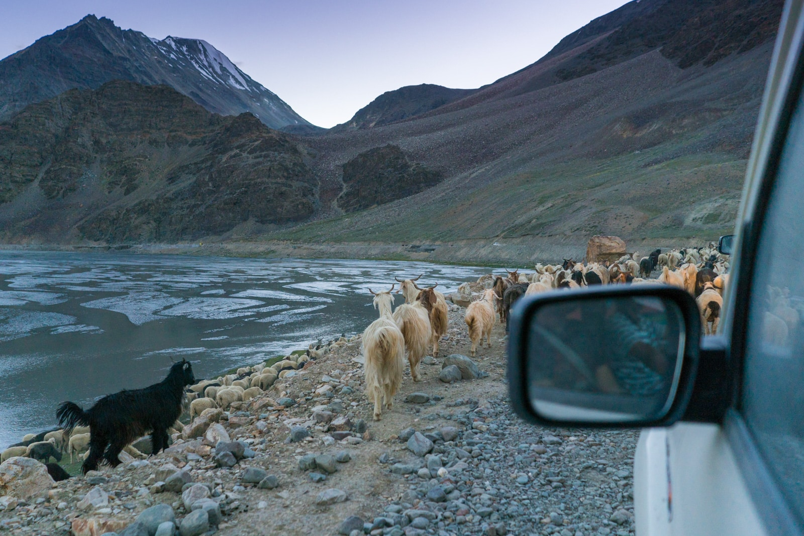 Hitchhiking the Leh - Manali highway - Goats on the road in the evening - Lost With Purpose travel blog