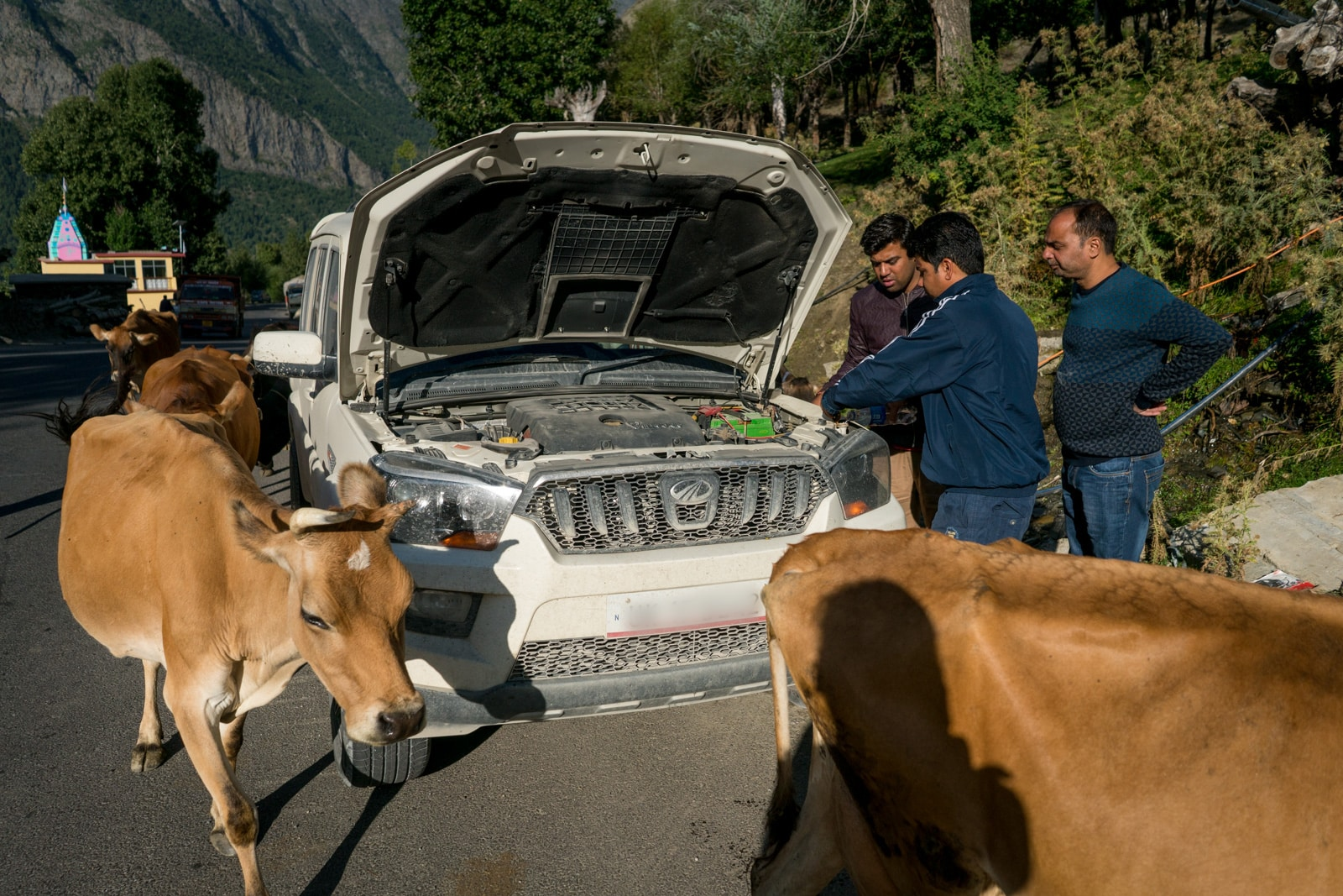 Hitchhiking the Leh - Manali highway - Cows and car troubles - Lost With Purpose travel blog