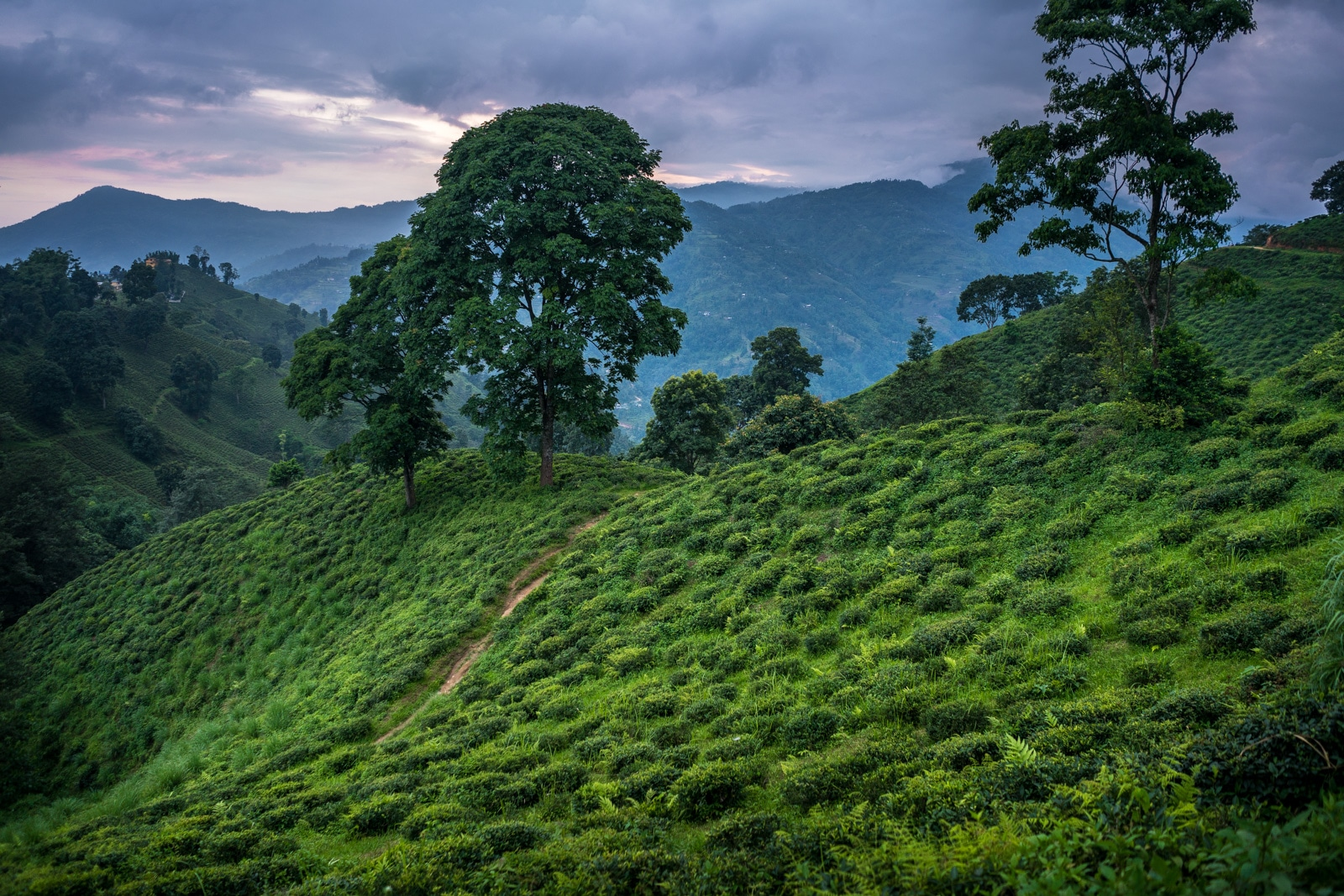 Traveling during monsoon in Nepal - The tea hills of Ilam in Eastern Nepal - Lost With Purpose travel blog