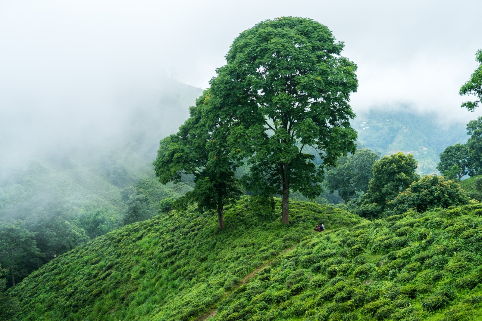 Travel in Nepal during monsoon - Ilam covered in clouds - Lost With Purpose travel blog