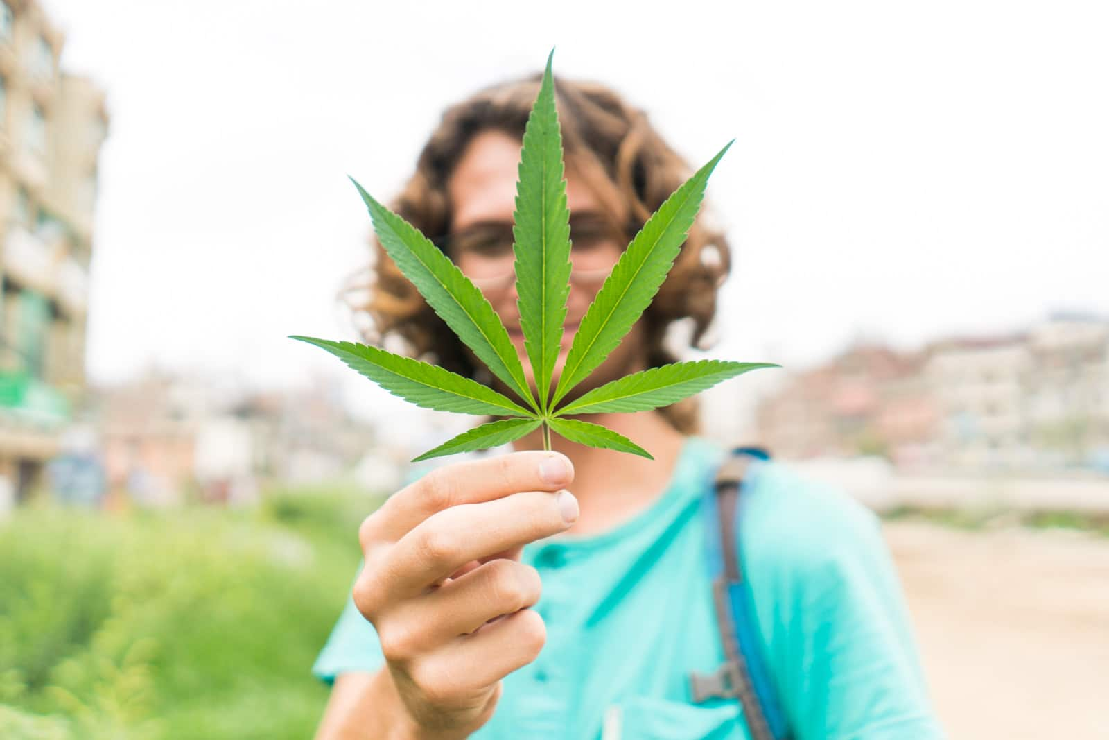 A wild marijuana plant in Patan, Nepal - Lost With Purpose travel blog