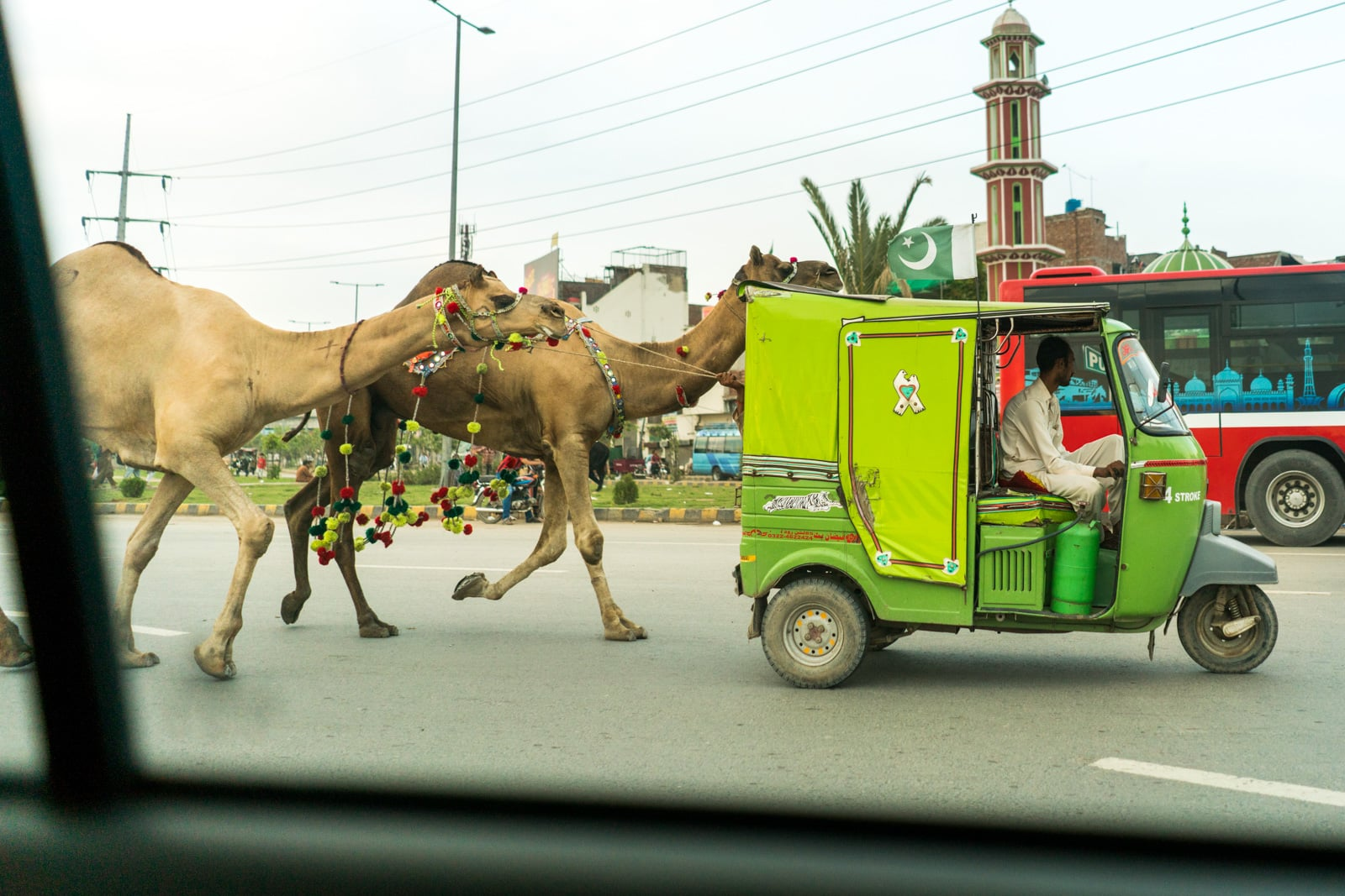 Celebrating Eid al-Adha in Lahore, Pakistan - Rickshaw pulling camels down the streets of Lahore - Lost With Purpose travel blog