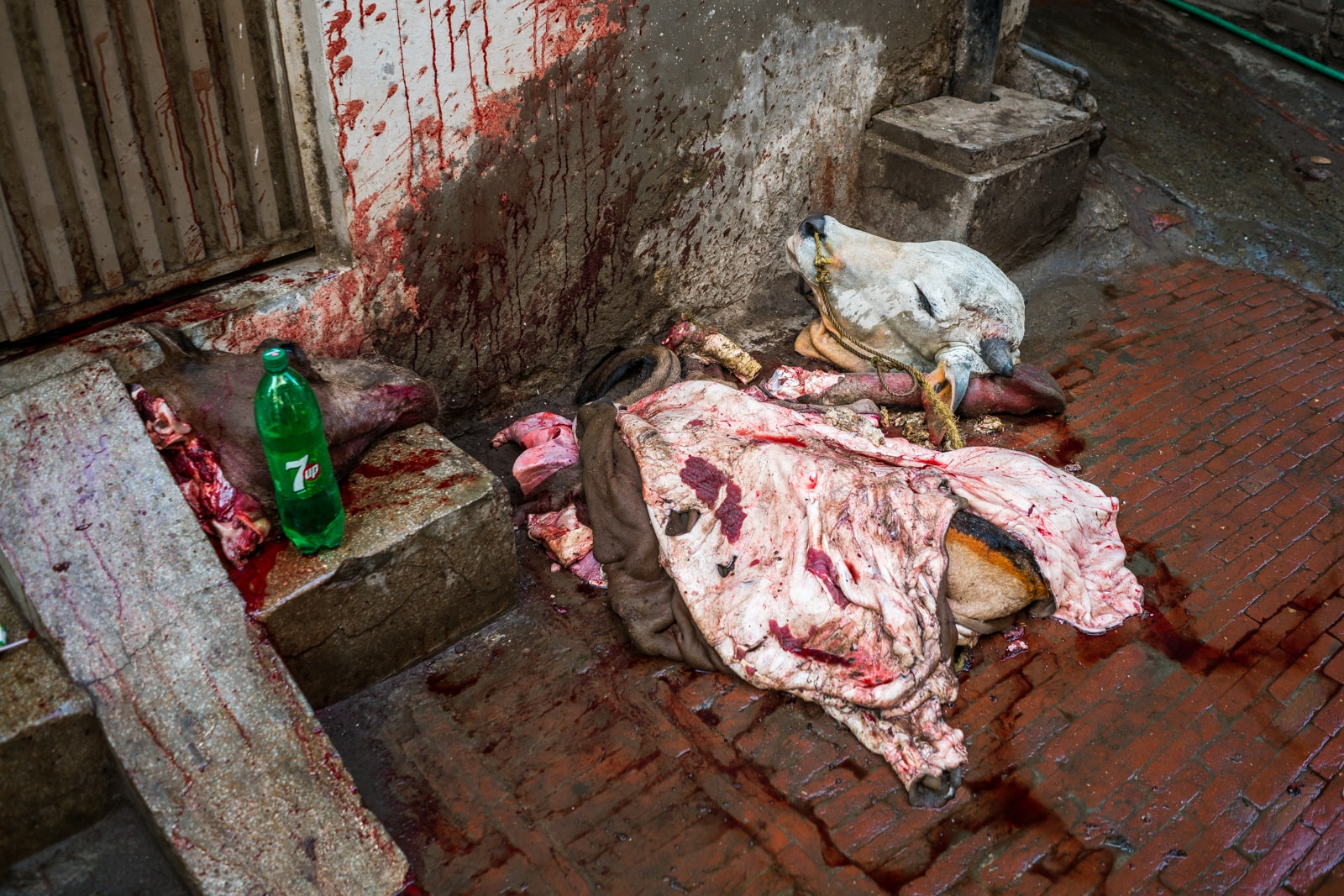 Celebrating Eid al-Adha in Lahore, Pakistan - Cow heads and skins on the streets of Lahore - Lost With Purpose travel blog