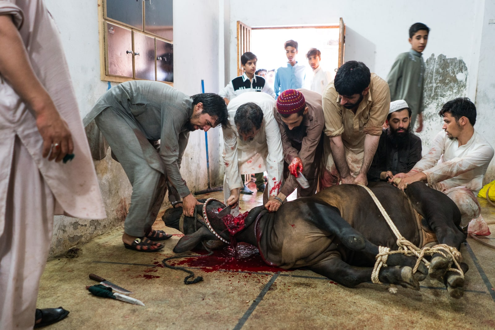 Celebrating Eid al-Adha in Lahore, Pakistan - Men sacrificing a cow for Eid al-Adha - Lost With Purpose travel blog
