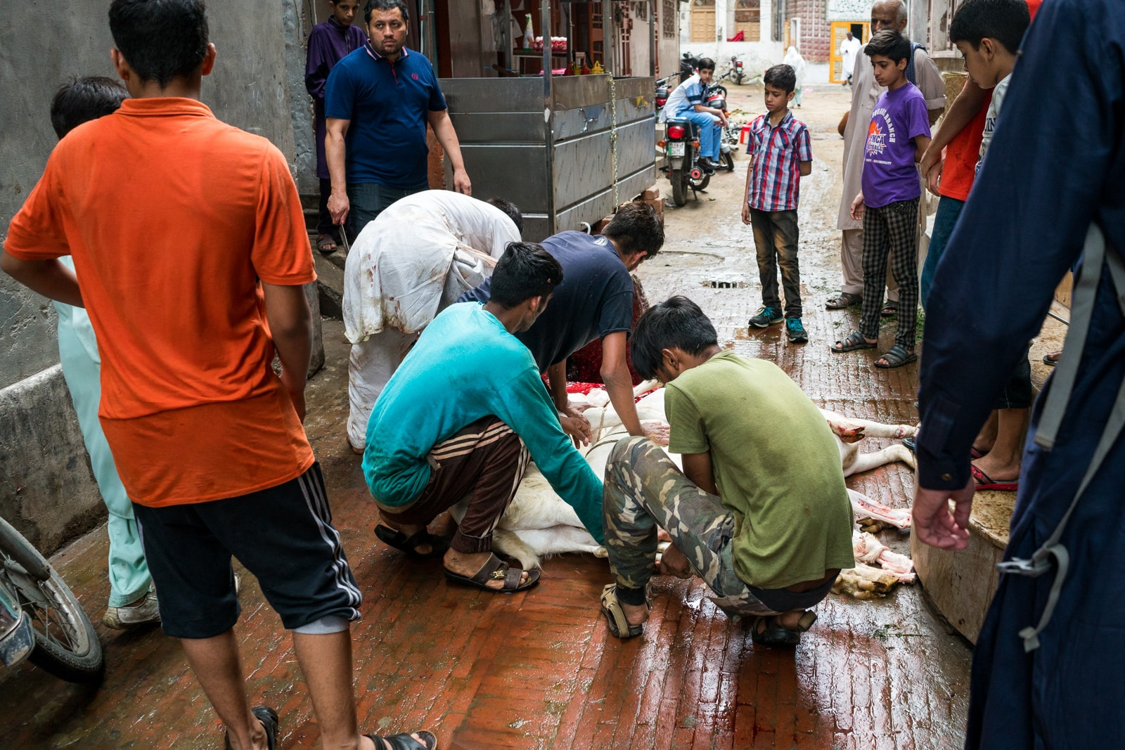 Celebrating Eid al-Adha in Lahore, Pakistan - Boys sacrificing a goat - Lost With Purpose travel blog