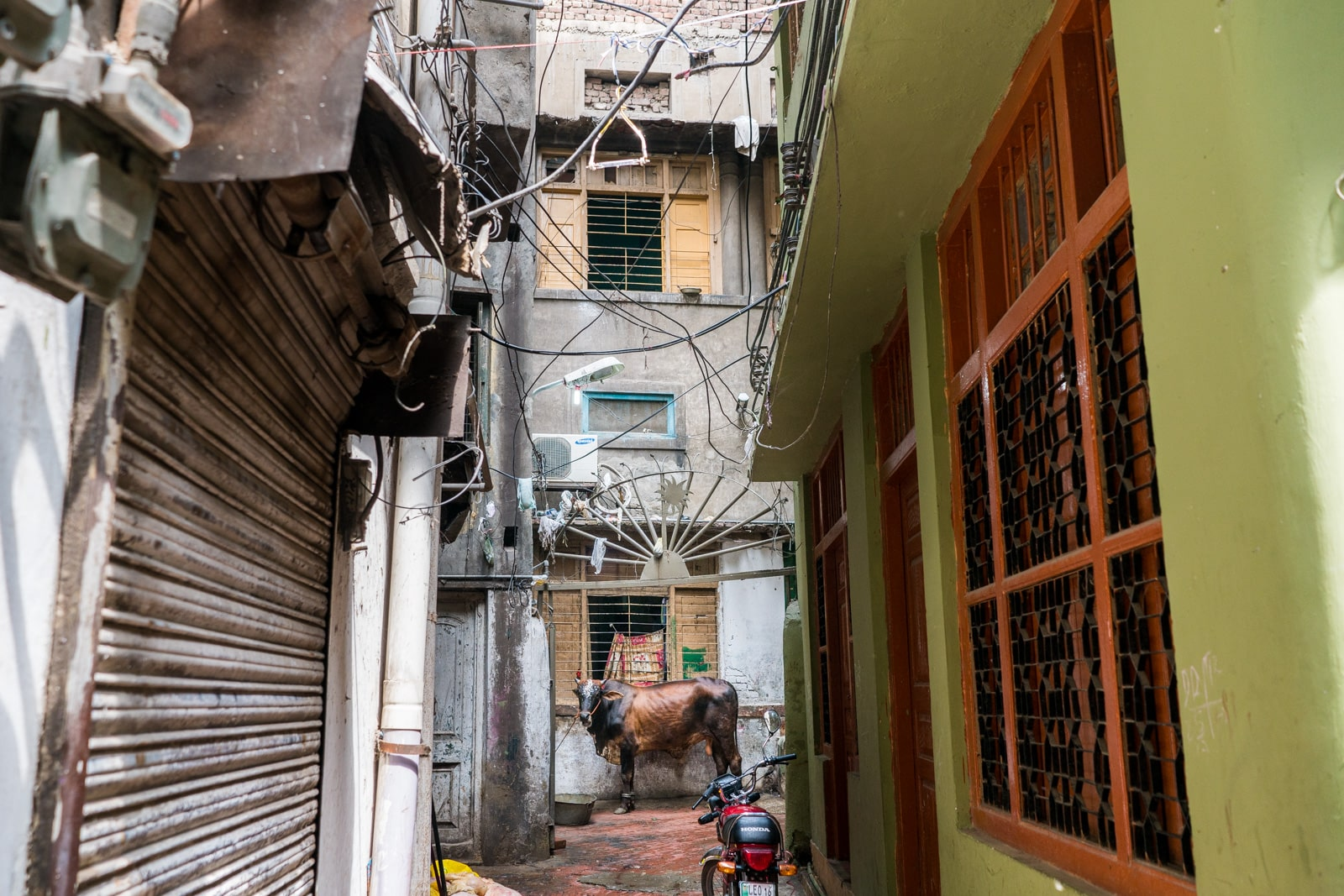 Celebrating Eid al-Adha in Lahore, Pakistan - A cow standing in an alley in Lahore - Lost With Purpose travel blog