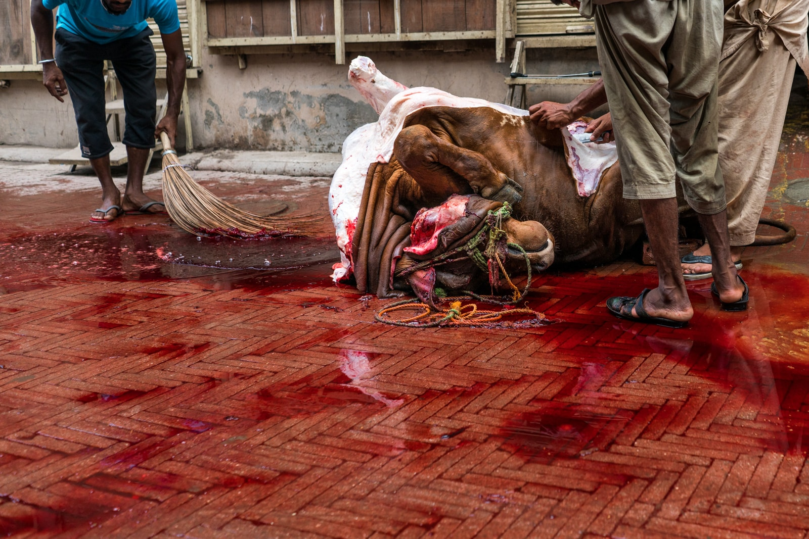 Celebrating Eid al-Adha in Lahore, Pakistan - Dead cow in a blood puddle