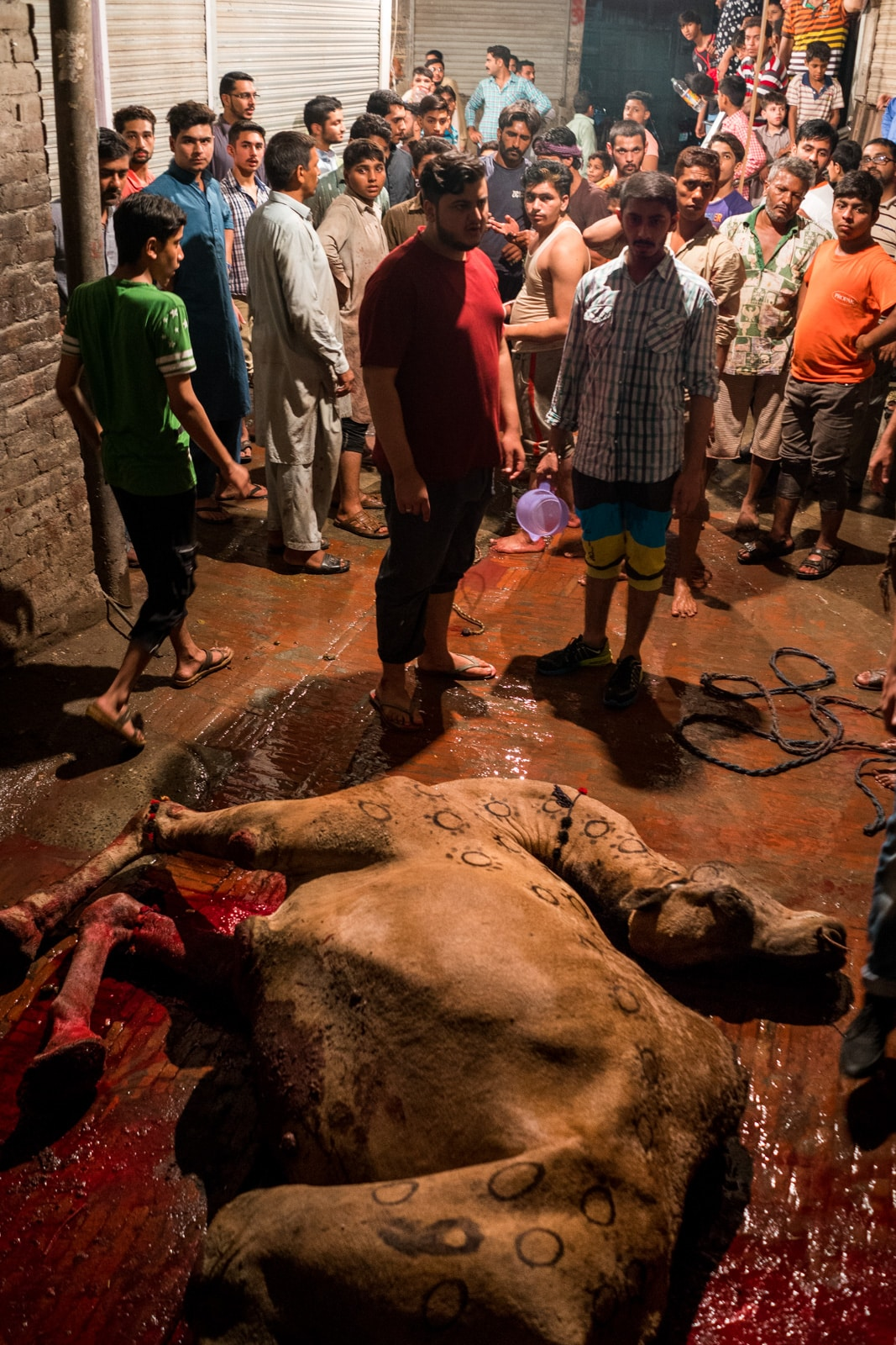 Celebrating Eid al-Adha in Lahore, Pakistan - Dead camel on the street - Lost With Purpose travel blog
