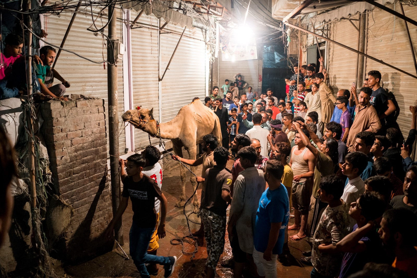 Celebrating Eid al-Adha in Lahore, Pakistan - Camel surrounded by a crowd of men - Lost With Purpose travel blog