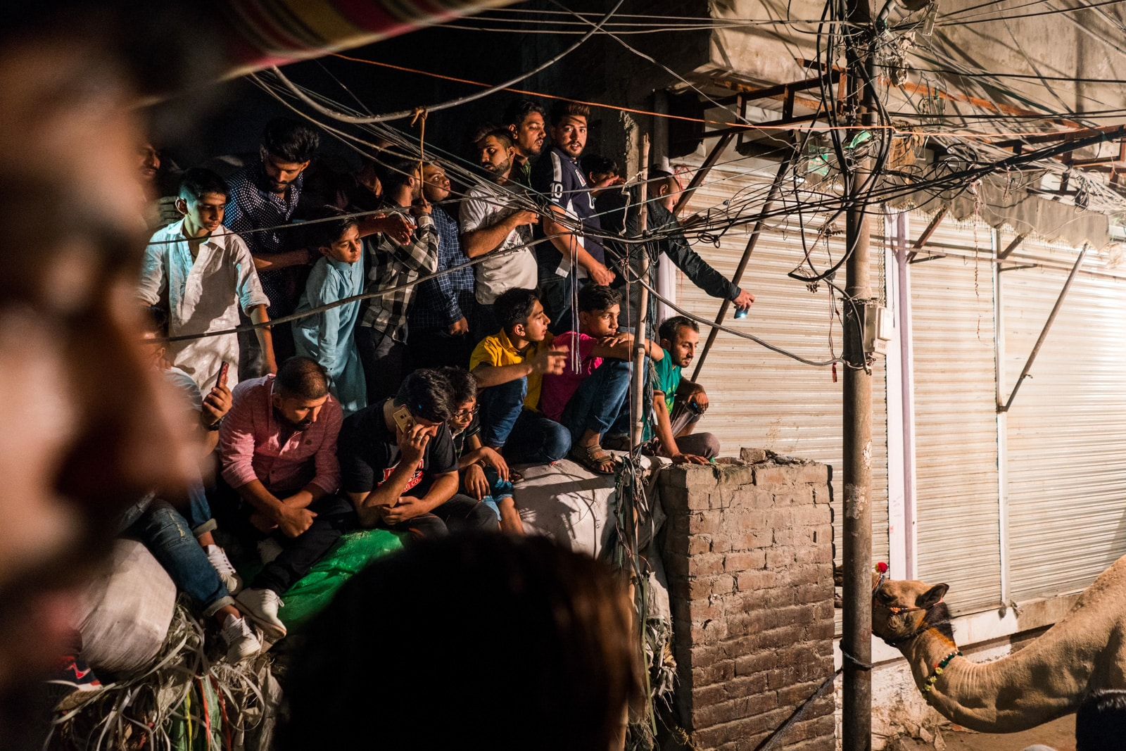 Celebrating Eid al-Adha in Lahore, Pakistan - Crowd of men watching a camel sacrifice - Lost With Purpose travel blog