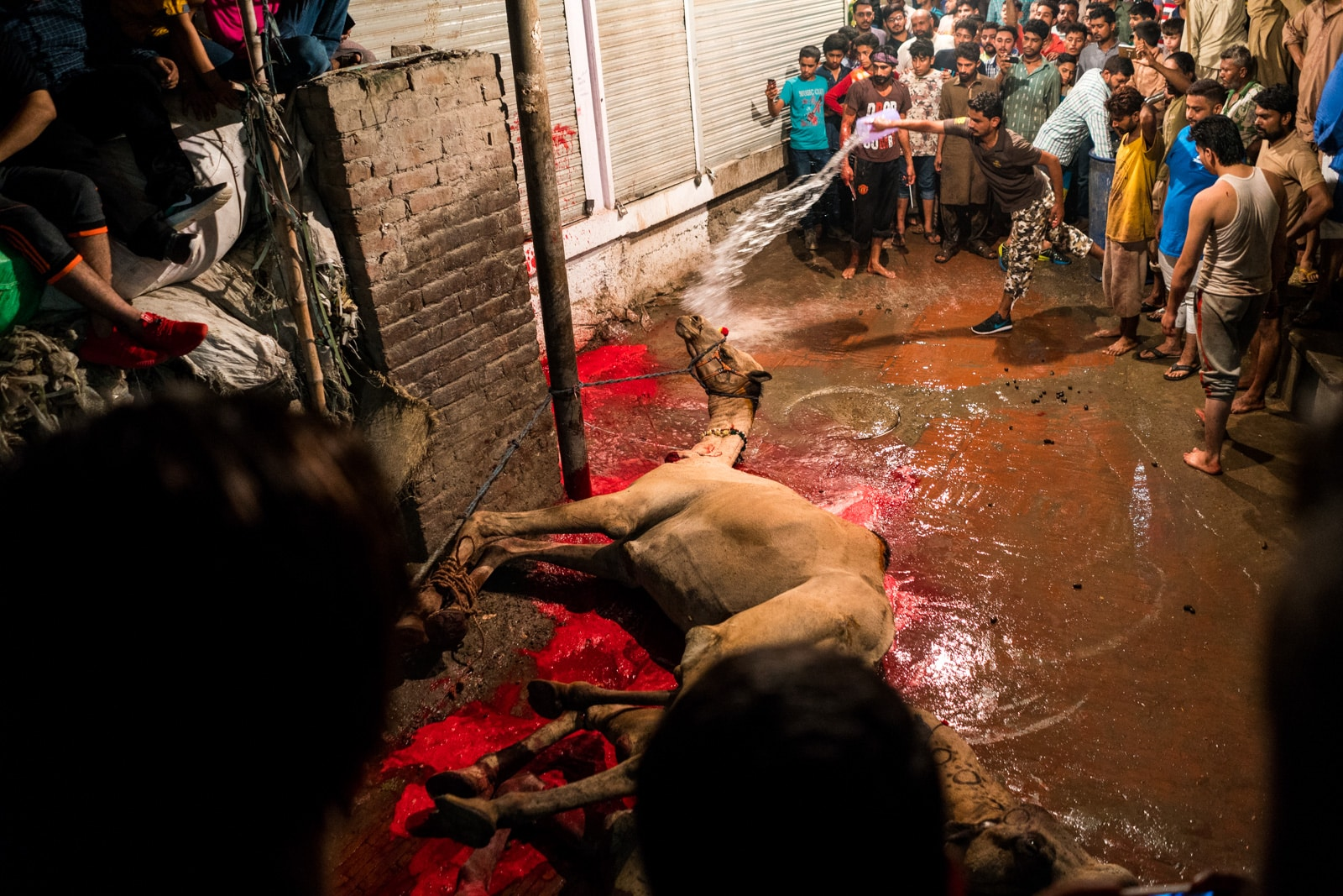 Celebrating Eid al-Adha in Lahore, Pakistan - A very bloody and almost dead camel - Lost With Purpose travel blog