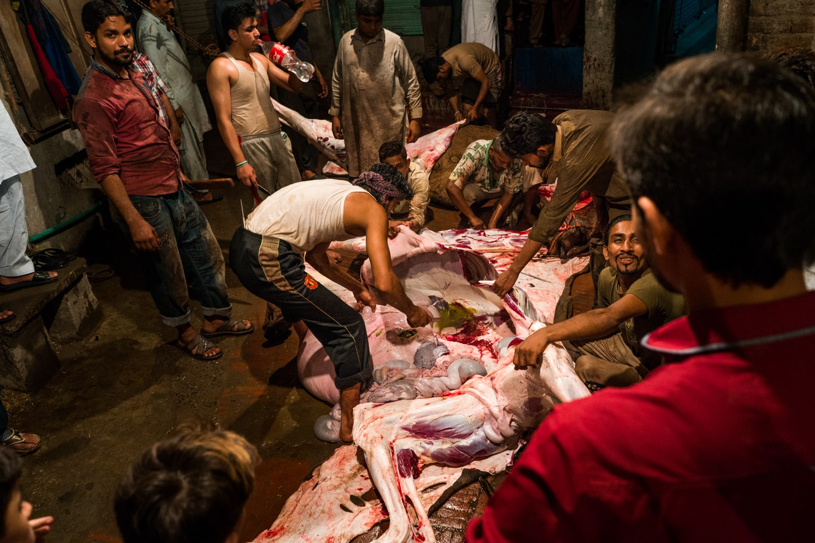 Celebrating Eid al-Adha in Lahore, Pakistan - Opened camel body and intestines - Lost With Purpose travel blog