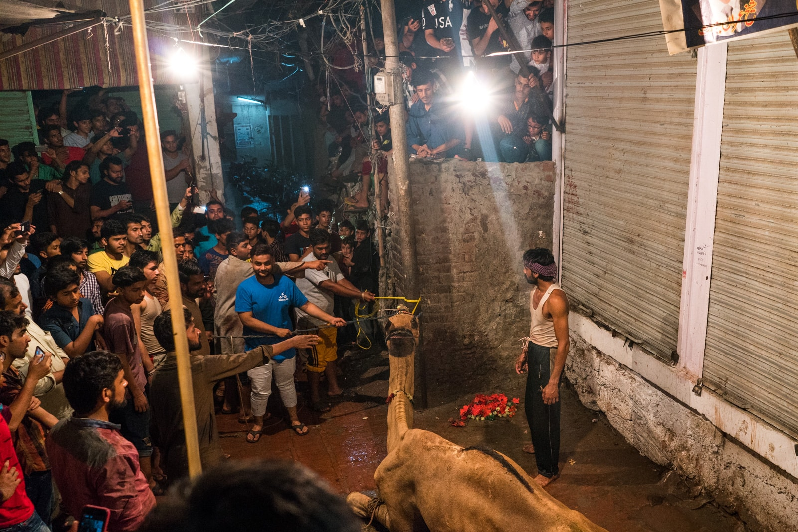 Celebrating Eid al-Adha in Lahore, Pakistan - Camel about to be slaughtered - Lost With Purpose travel blog