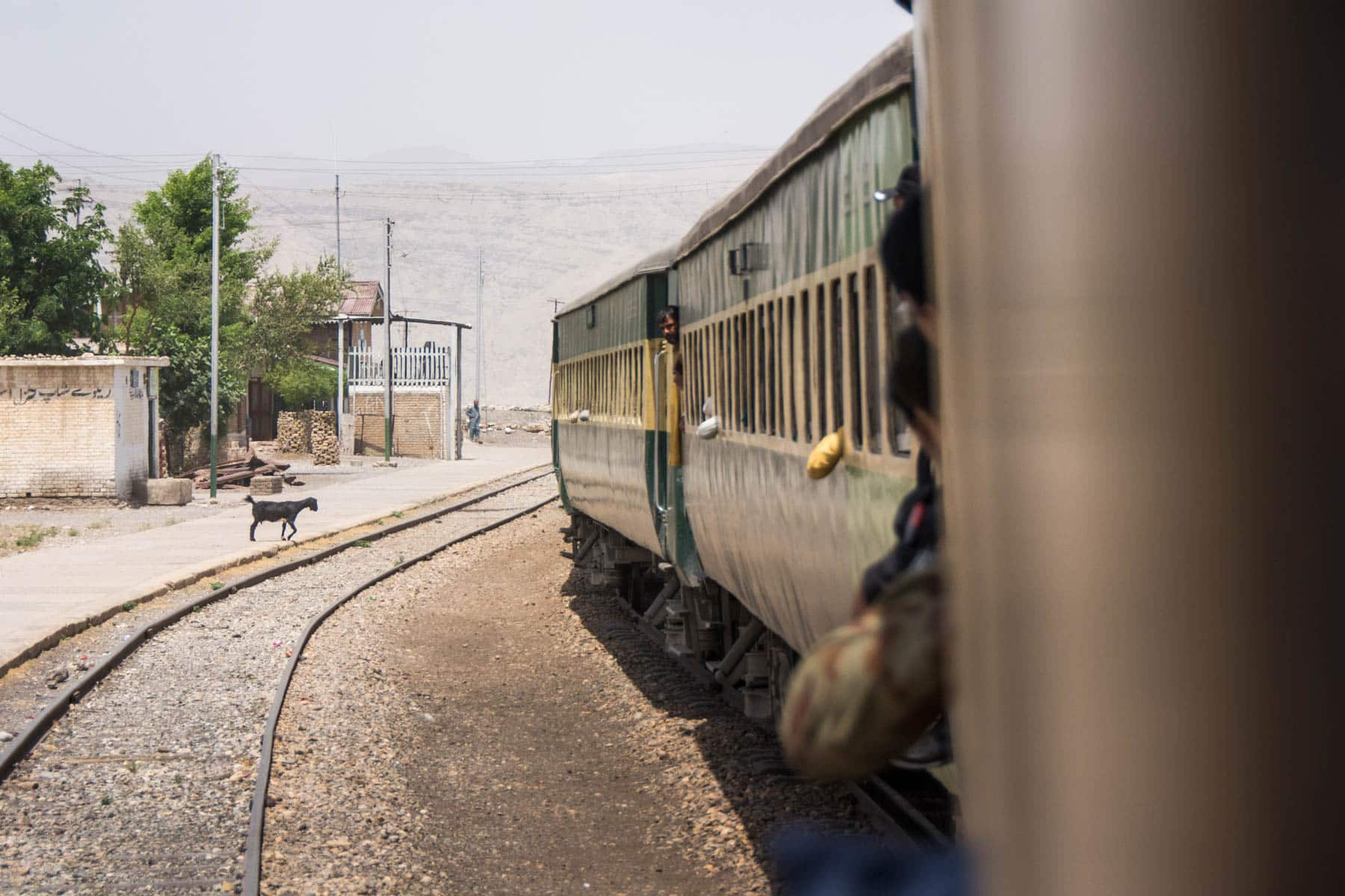 Guide to train travel in Pakistan - Goat on the train platform - Lost With Purpose travel blog