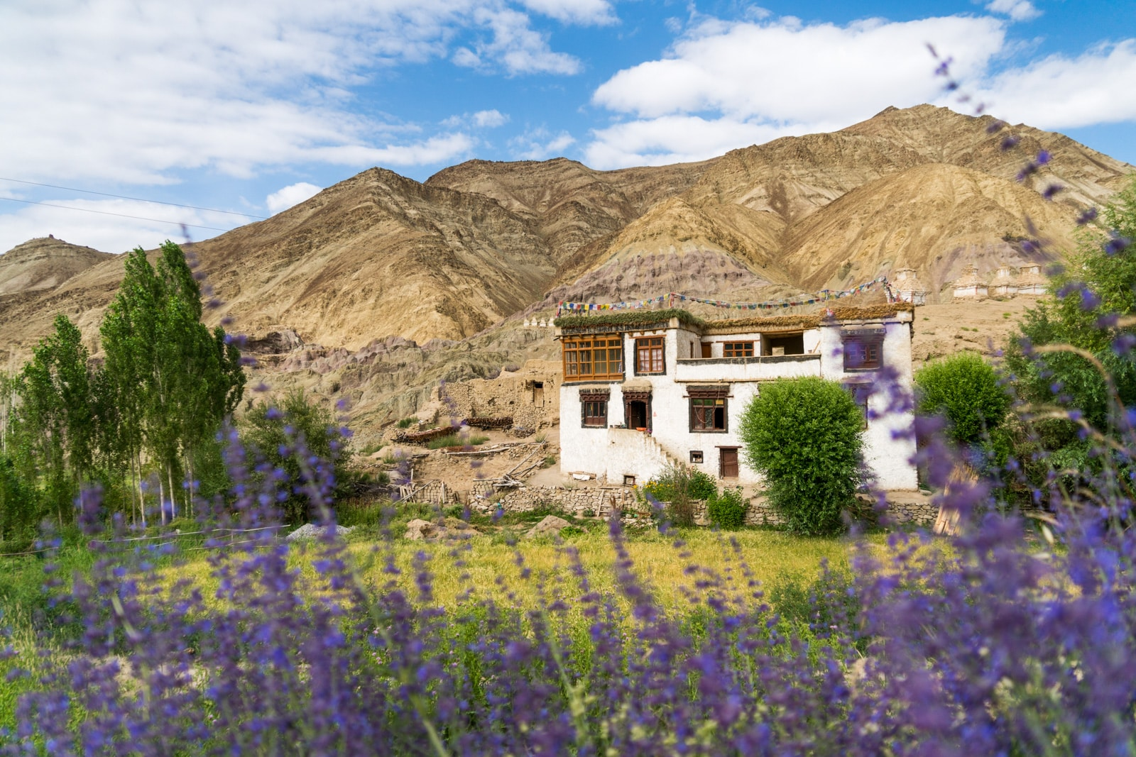 Short 3-day itinerary and guide to the Sham Valley trek in Ladakh, India - Traditional home in Likir with purple flowers - Lost With Purpose travel blog