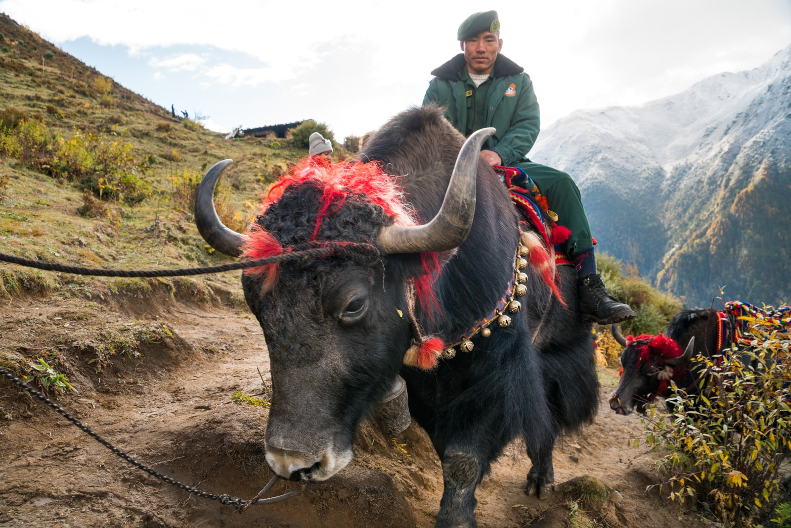 Photos of the 2017 Royal Highlander Festival in Bhutan - Man on a yak walking up to the festival - Lost With Purpose travel blog