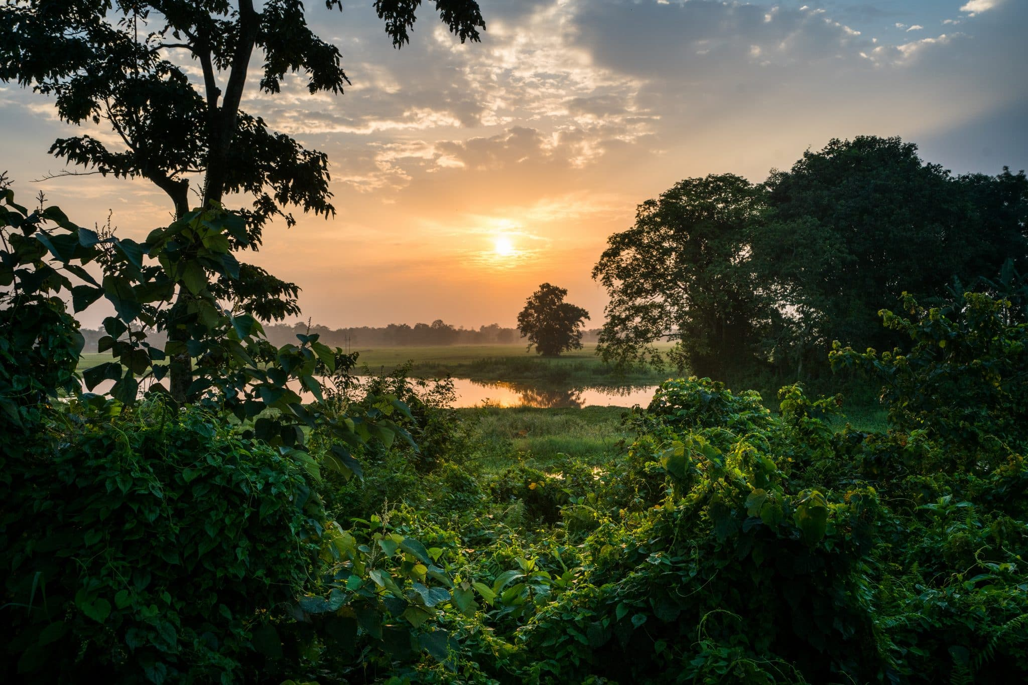 Golden sunrise over Majuli river island