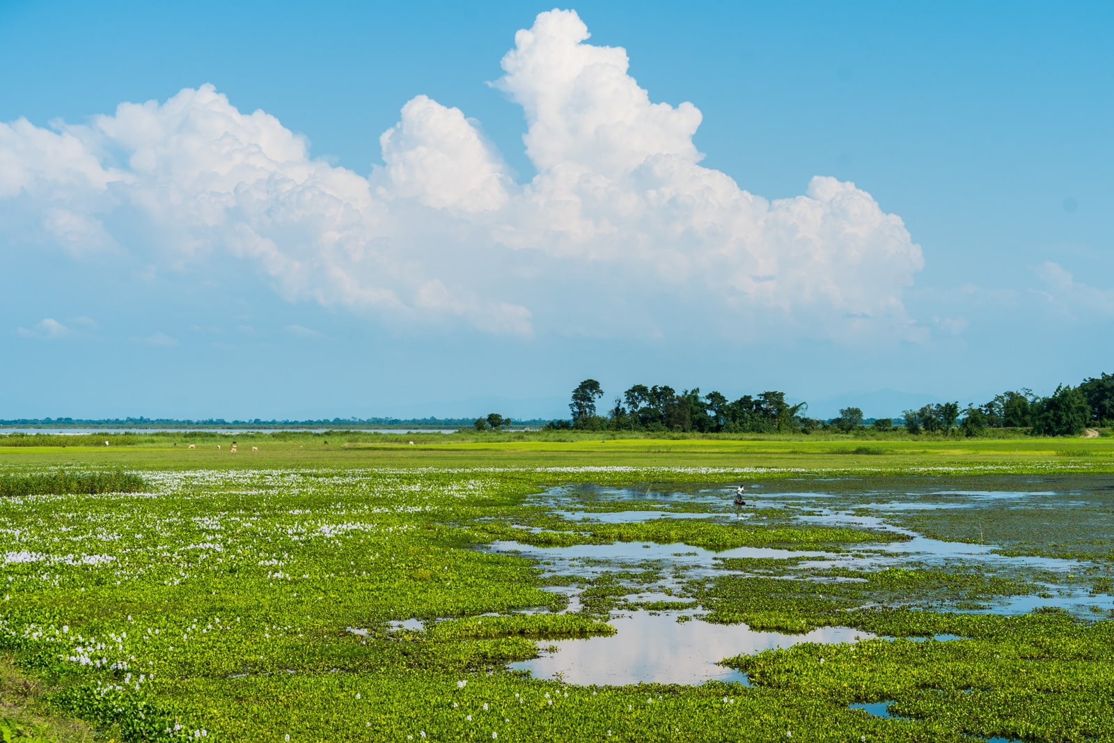 A sunny day on Majuli river island in Assam, India - Lost With Purpose travel blog