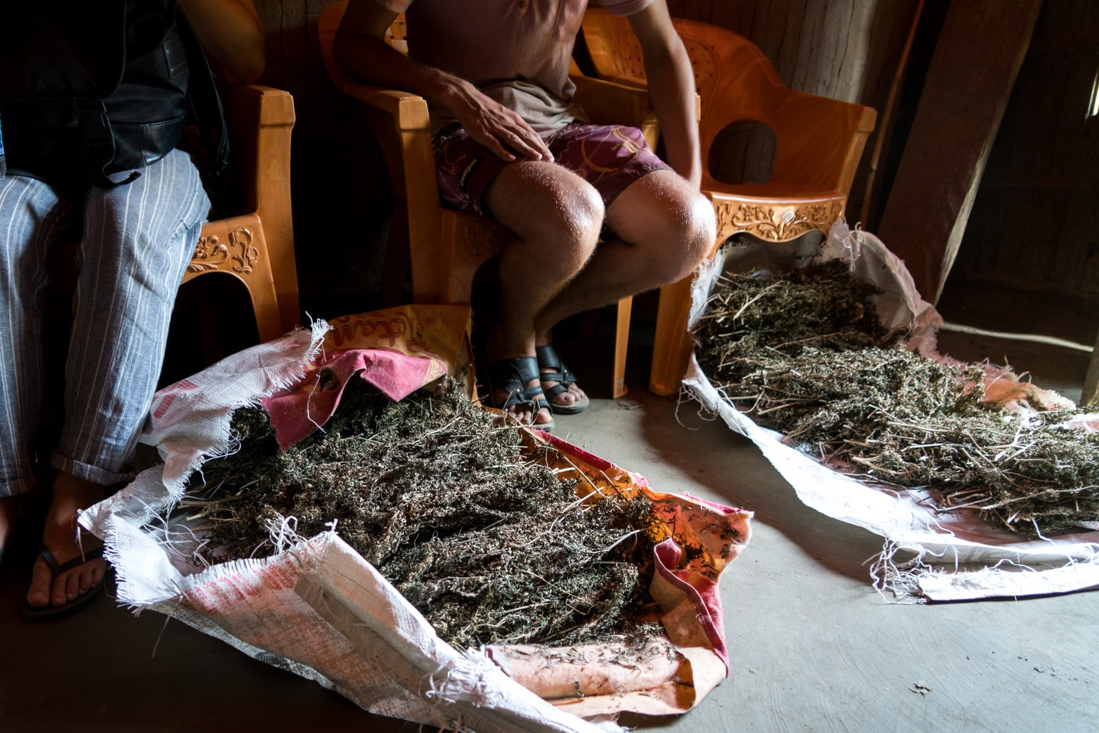 Guide to smoking weed in India - Piles of wild weed in Majuli island, Assam - Lost With Purpose travel blog