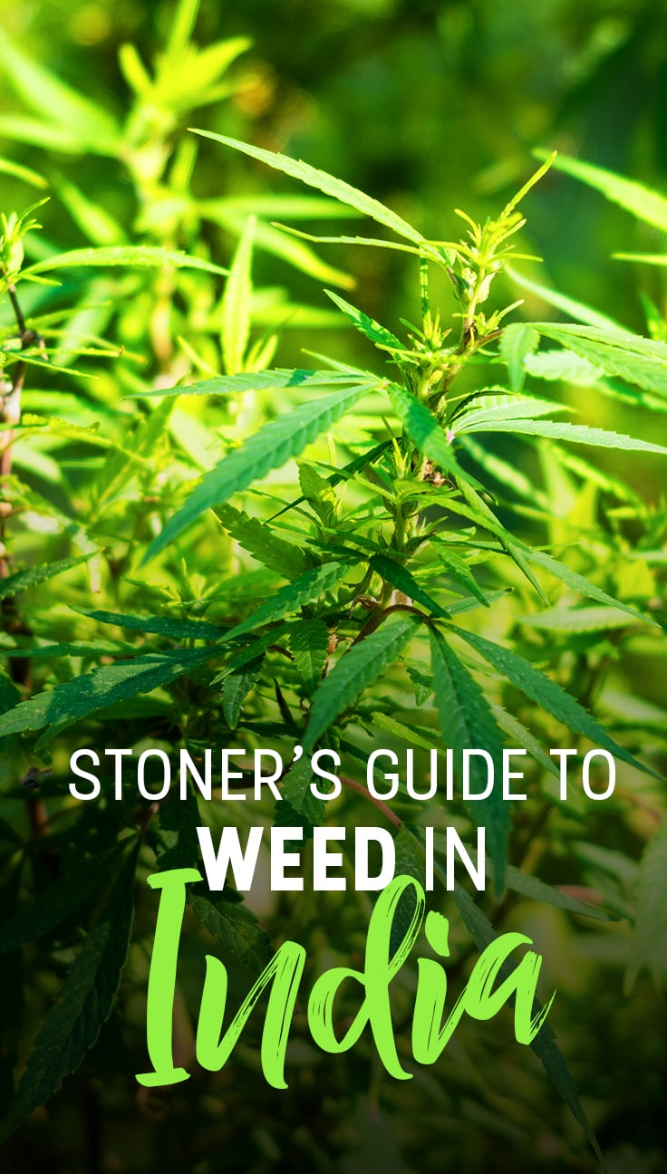 The stoner's guide to weed in India - Lost With Purpose