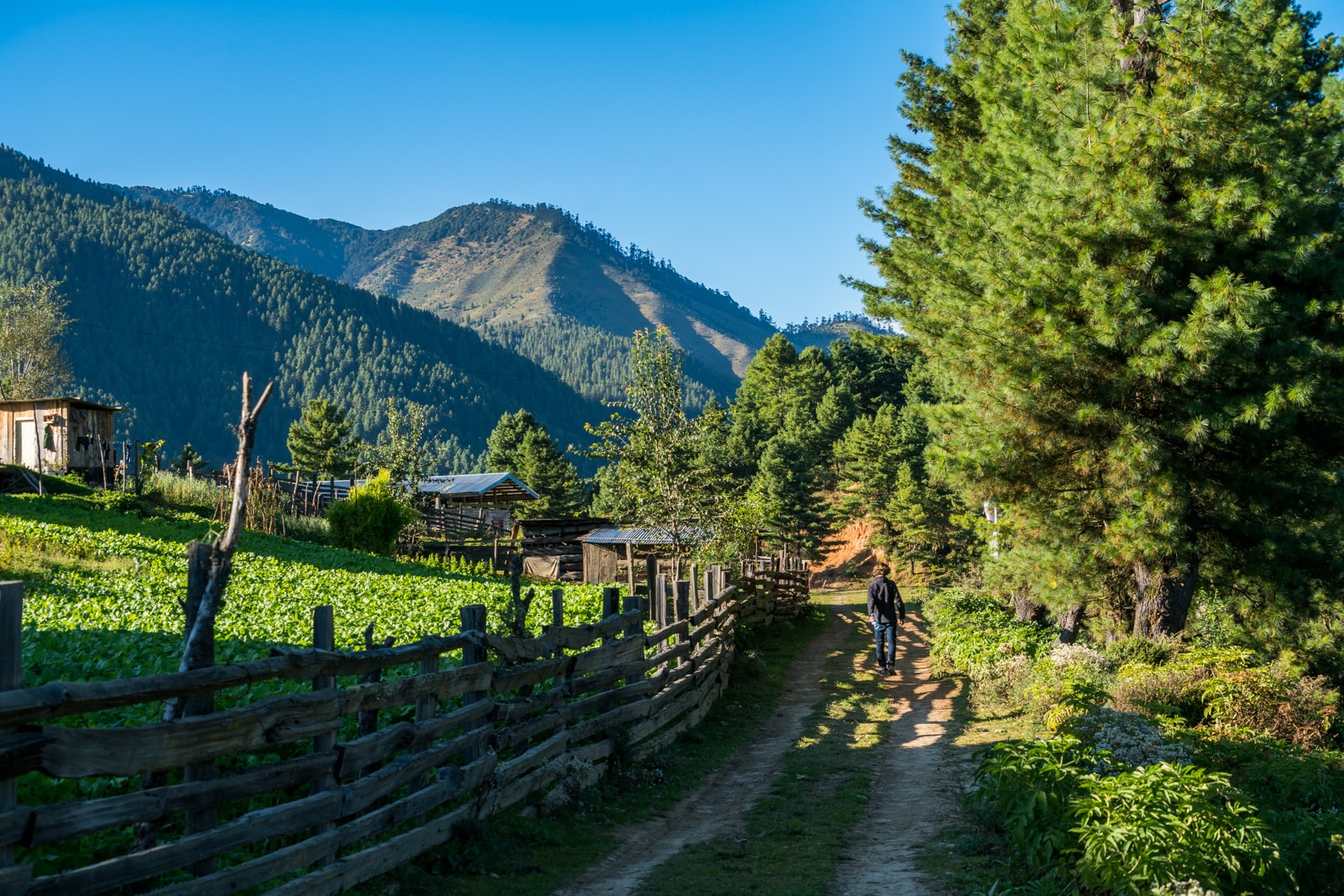 A review of our guided tour in Bhutan - Walking on a path in Phobjikha Valley on our own - Lost With Purpose travel blog