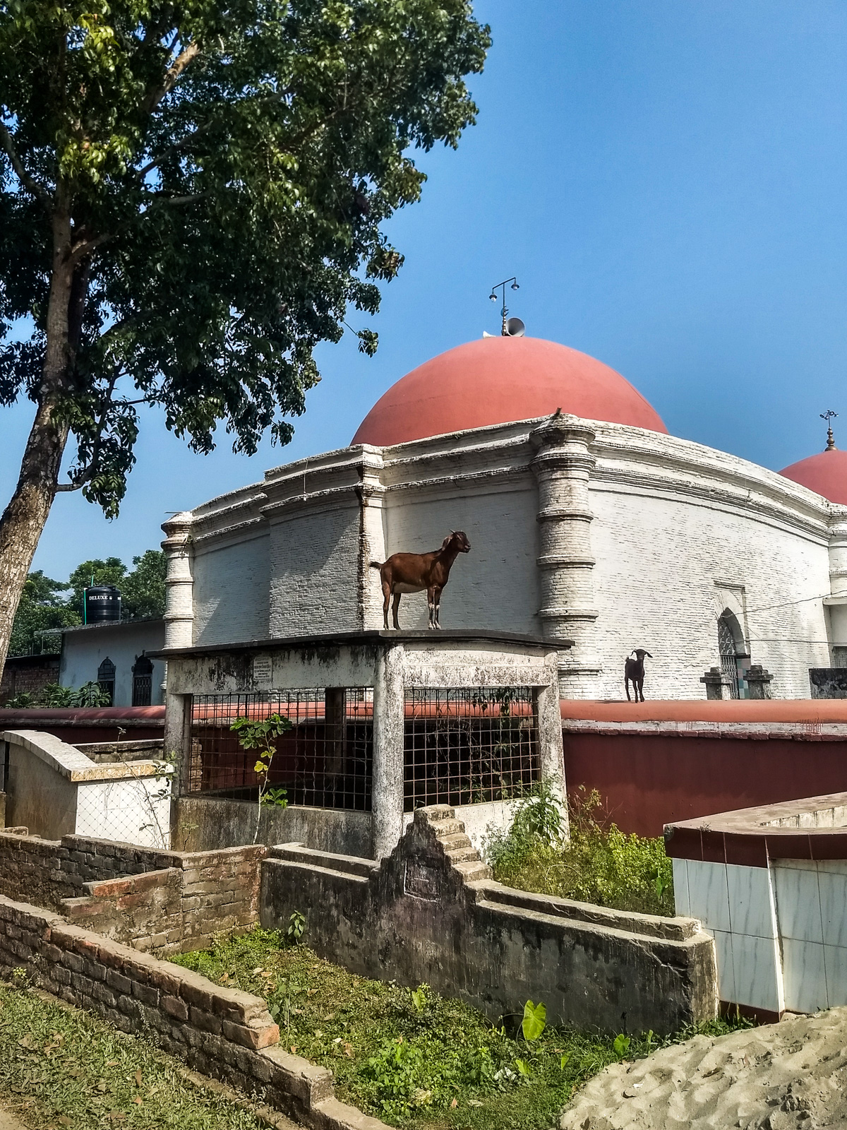How to get from Khulna to Bagerhat by bus - Goat posing in front of tomb of Khan Jahan Ali - Lost With Purpose travel blog